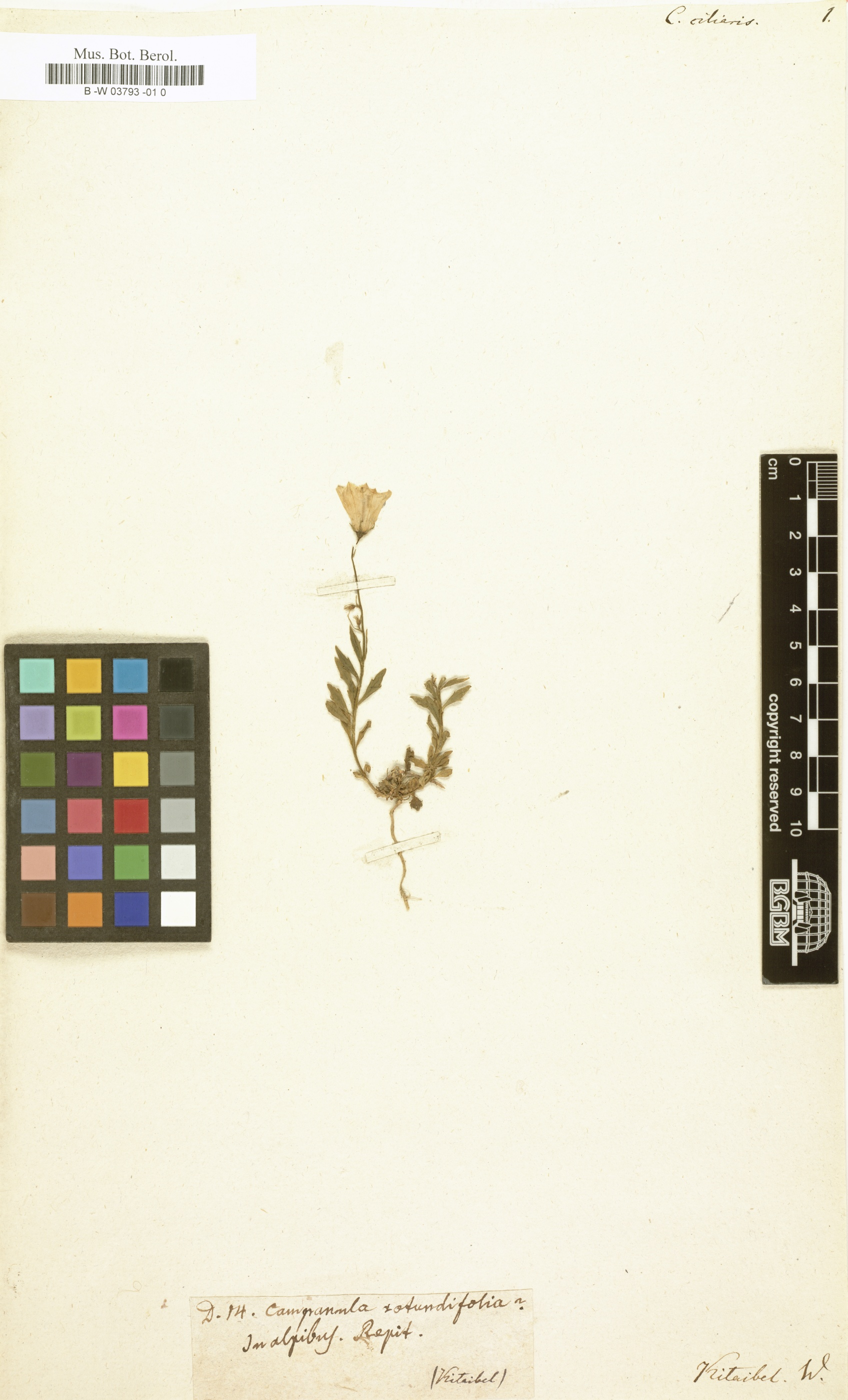 http://ww2.bgbm.org/herbarium/images/B/-W/03/79/B_-W_03793%20-01%200.jpg