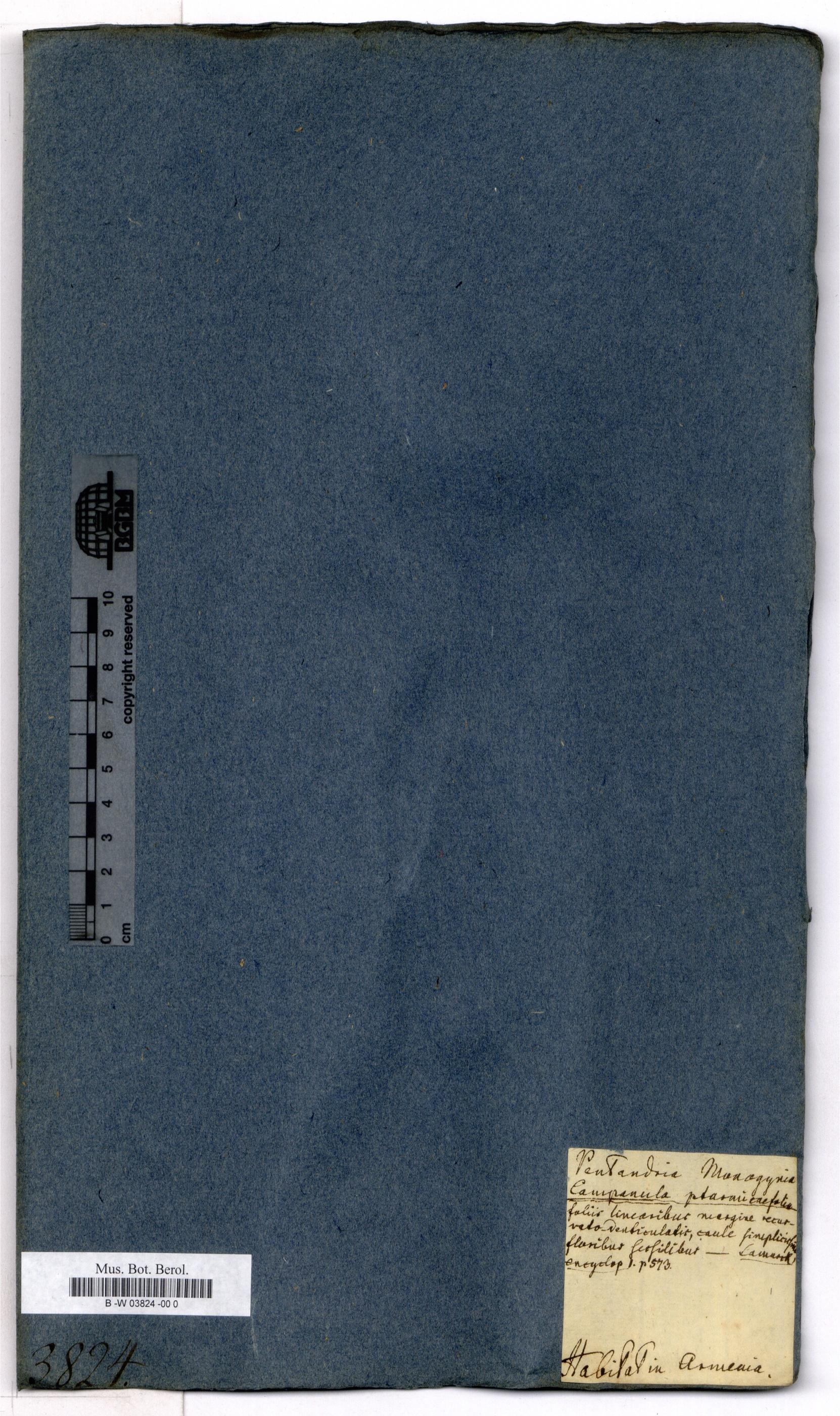http://ww2.bgbm.org/herbarium/images/B/-W/03/82/B_-W_03824%20-00%200__3.jpg