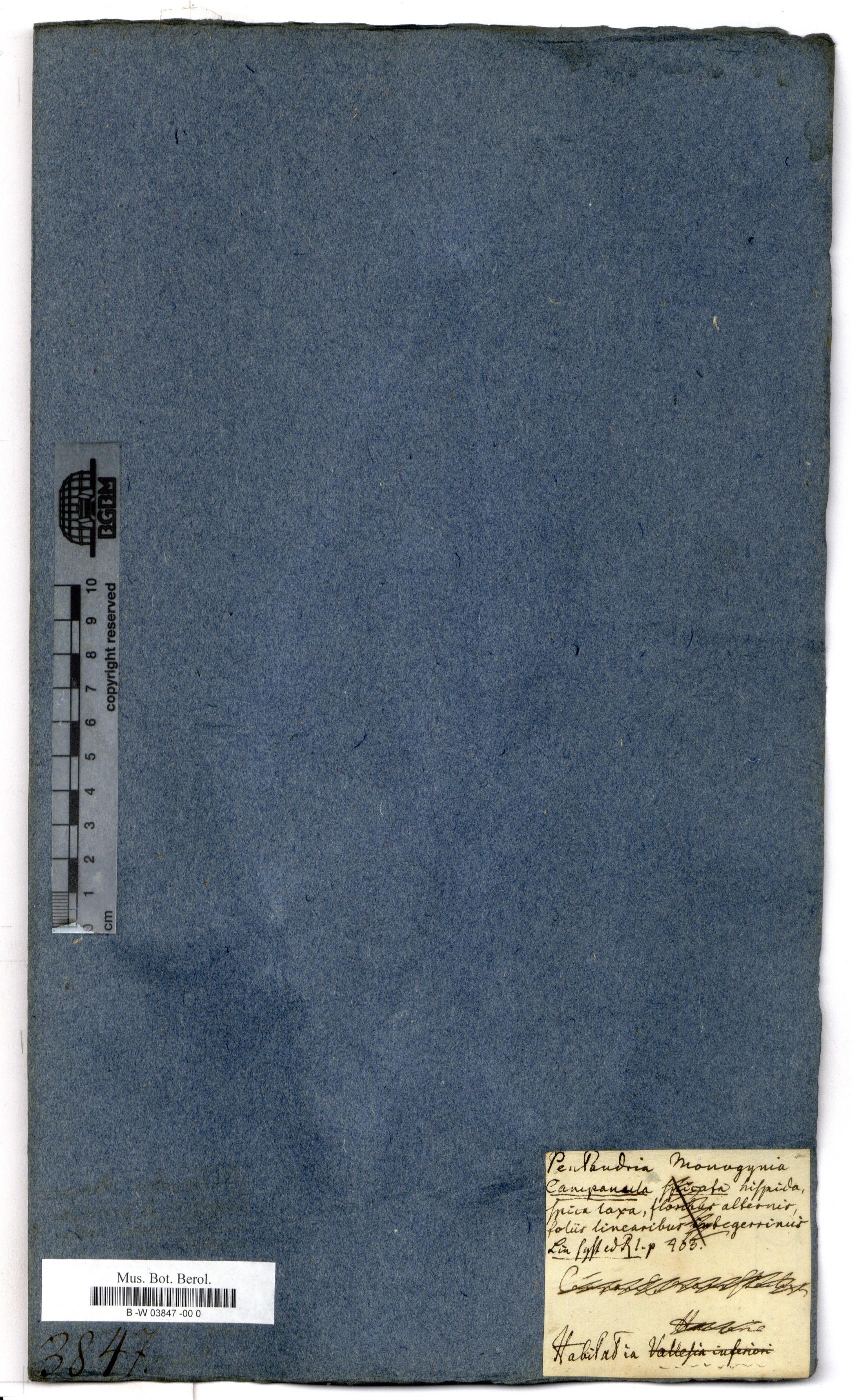 http://ww2.bgbm.org/herbarium/images/B/-W/03/84/B_-W_03847%20-00%200__3.jpg