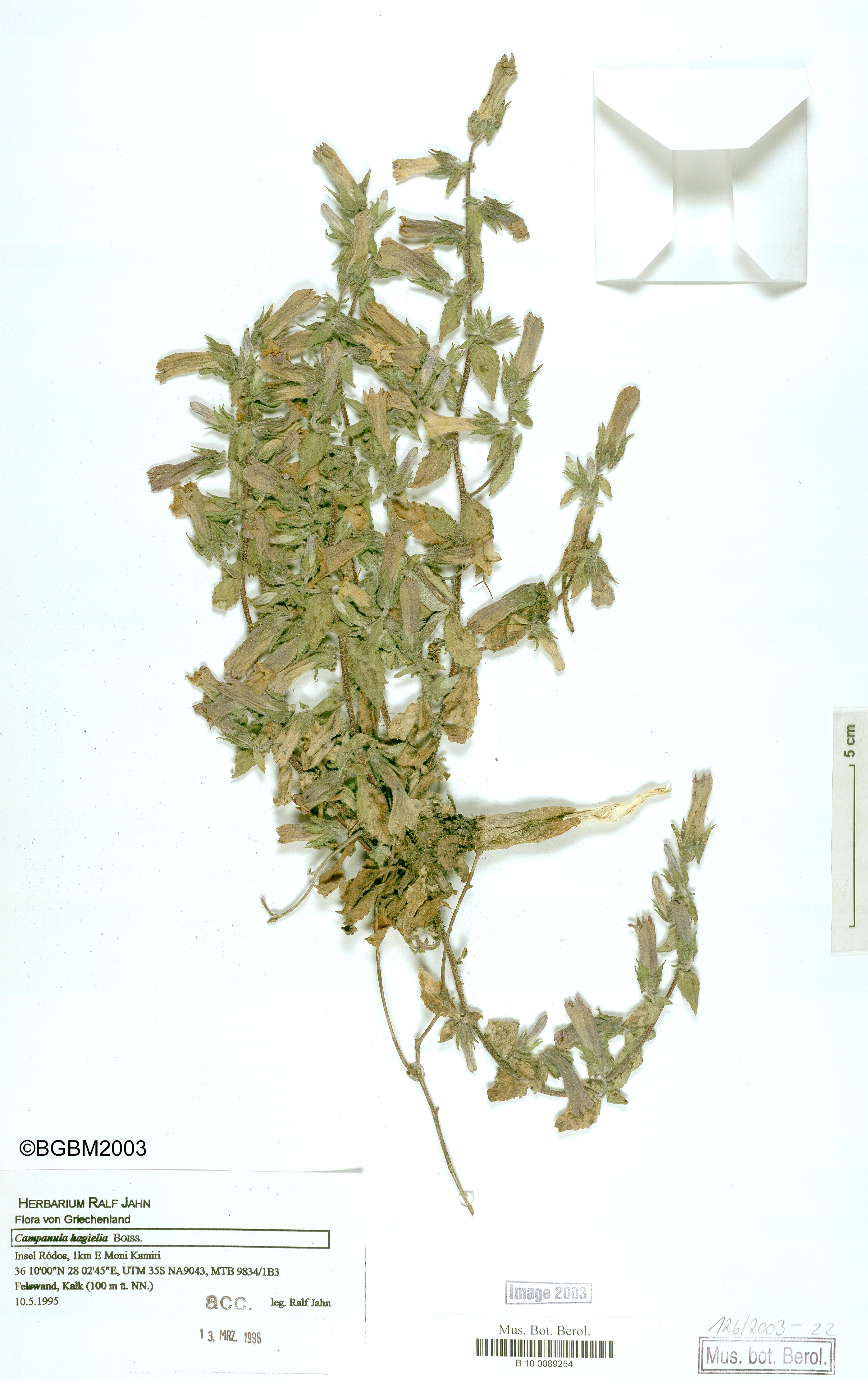http://ww2.bgbm.org/herbarium/images/B/10/00/89/25/B_10_0089254.jpg