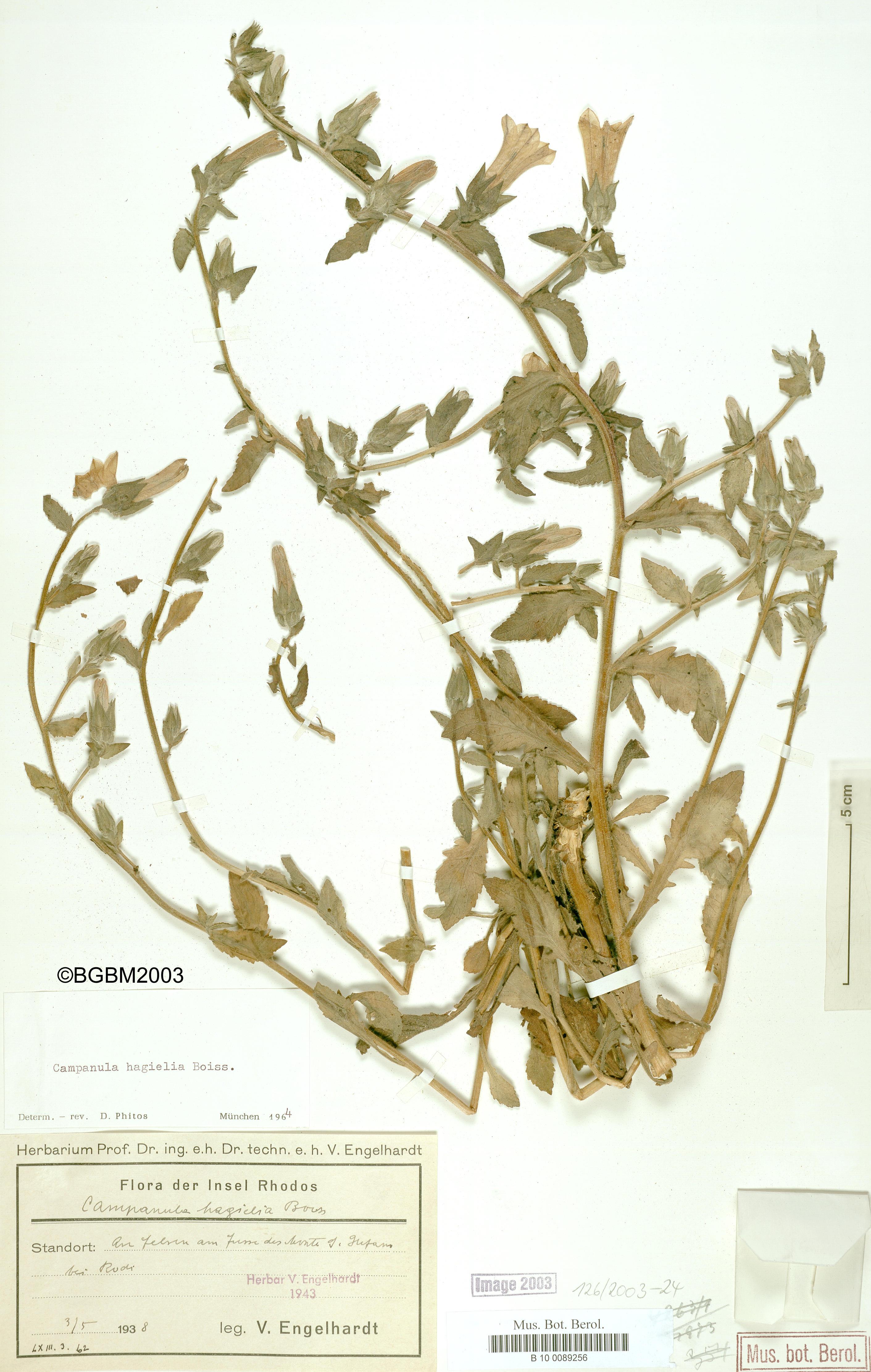 http://ww2.bgbm.org/herbarium/images/B/10/00/89/25/B_10_0089256.jpg