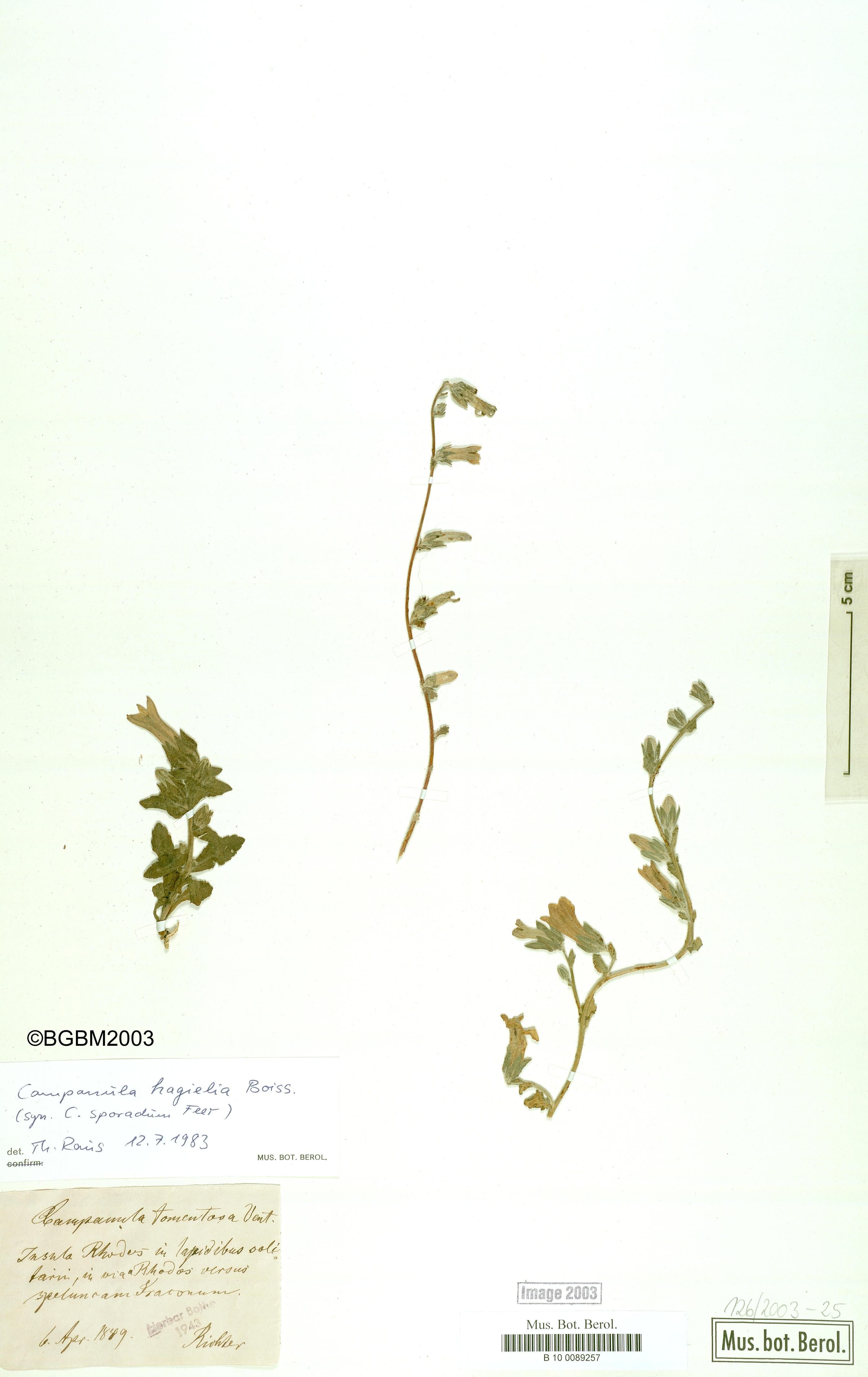 http://ww2.bgbm.org/herbarium/images/B/10/00/89/25/B_10_0089257.jpg