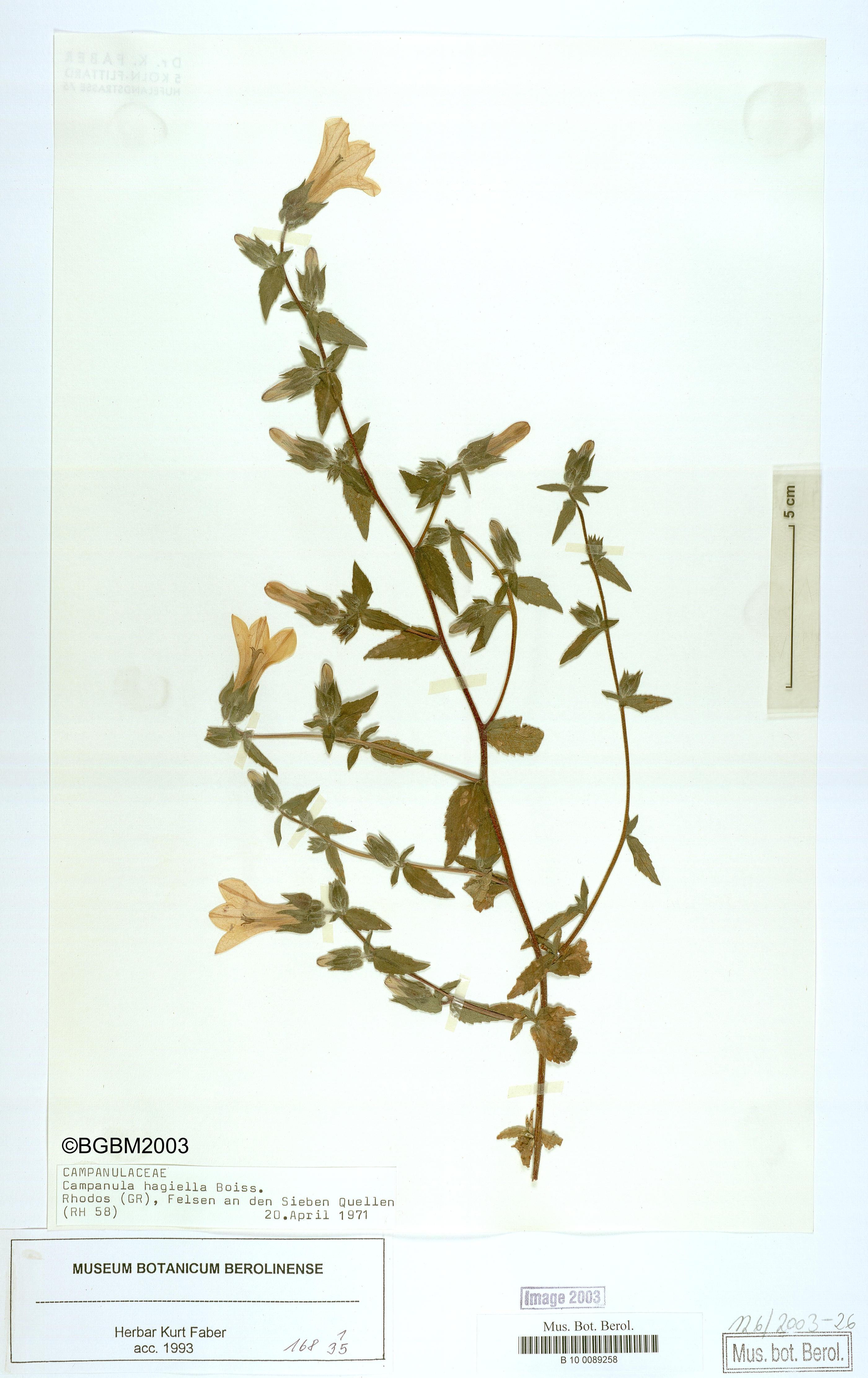 http://ww2.bgbm.org/herbarium/images/B/10/00/89/25/B_10_0089258.jpg