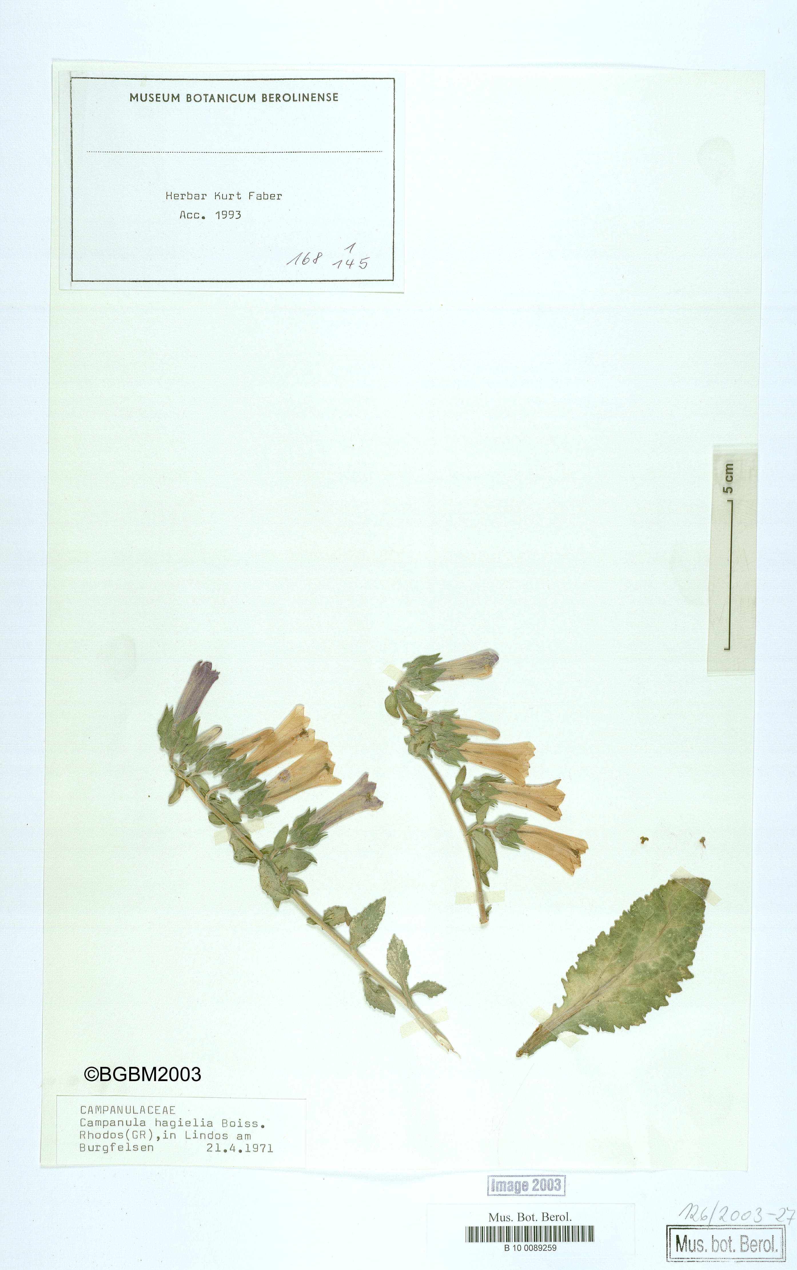 http://ww2.bgbm.org/herbarium/images/B/10/00/89/25/B_10_0089259.jpg