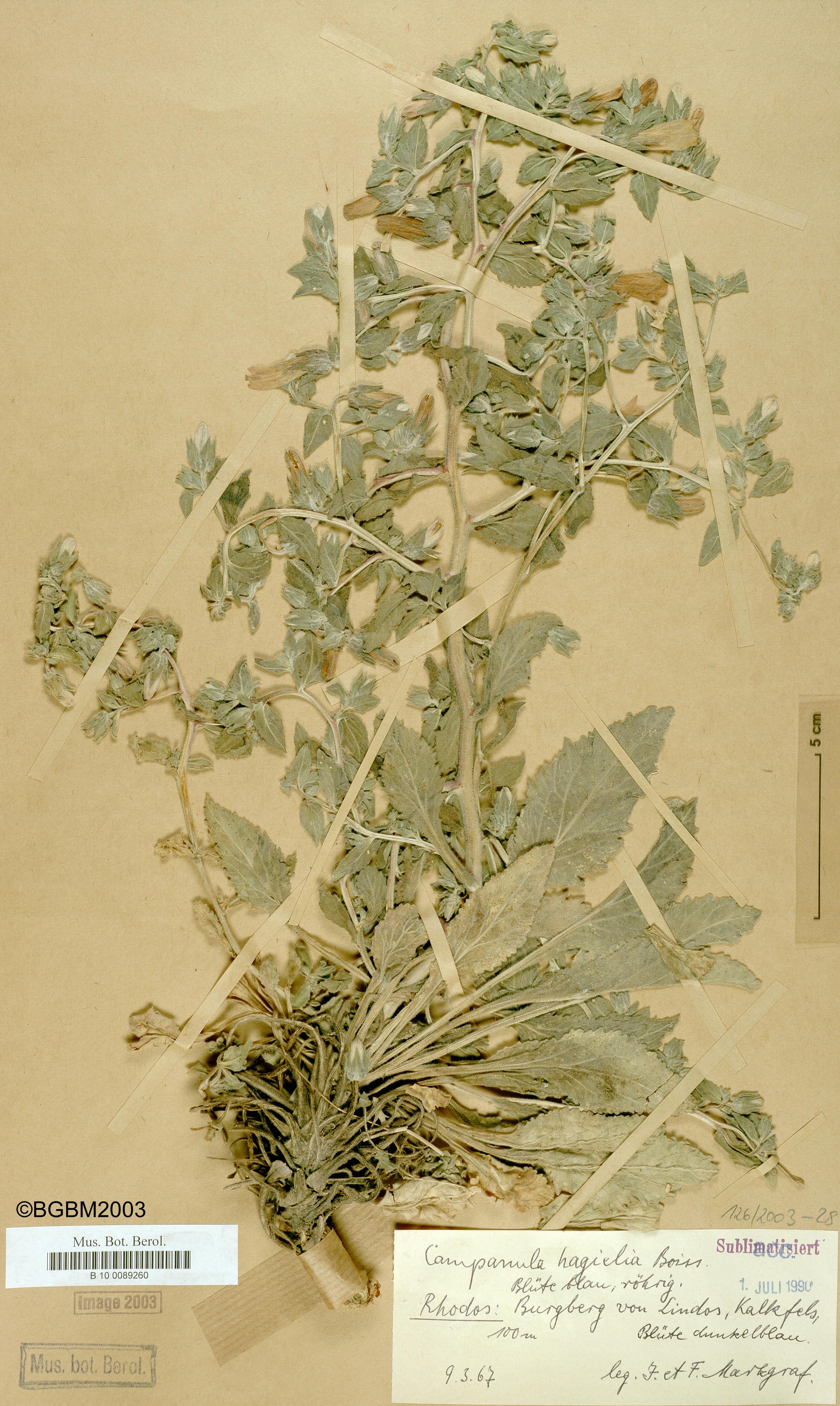 http://ww2.bgbm.org/herbarium/images/B/10/00/89/26/B_10_0089260.jpg