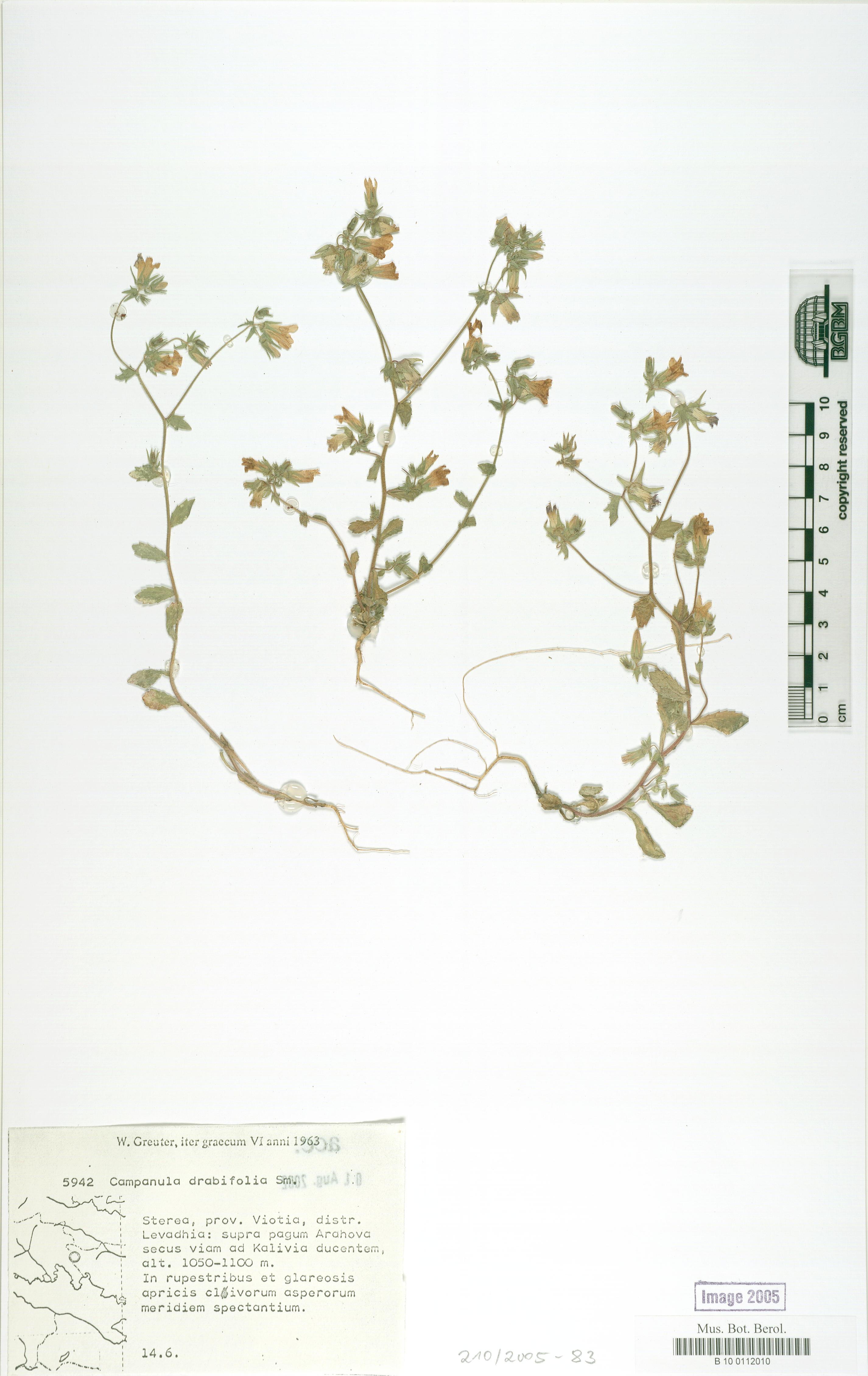 http://ww2.bgbm.org/herbarium/images/B/10/01/12/01/B_10_0112010.jpg