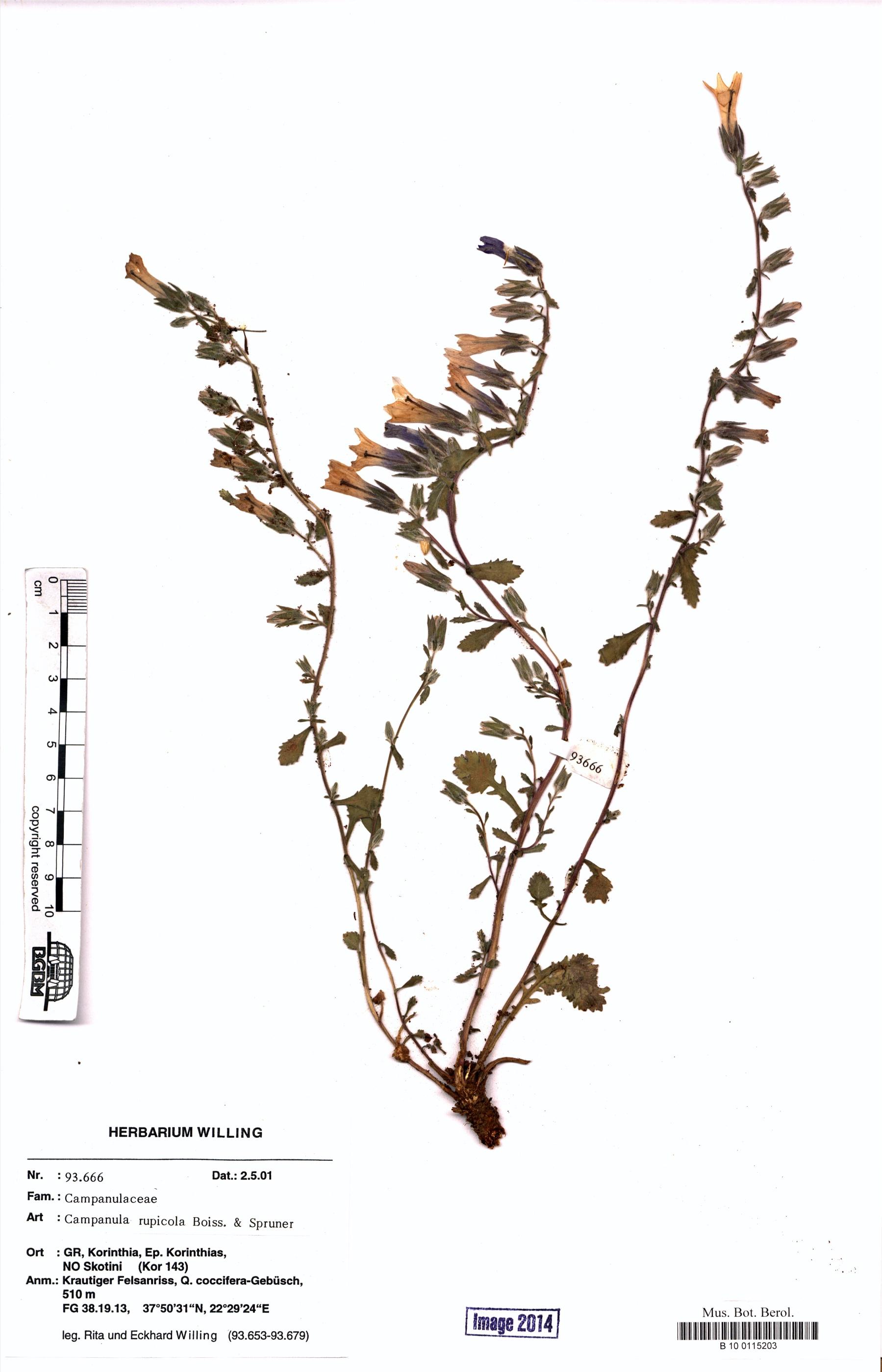 http://ww2.bgbm.org/herbarium/images/B/10/01/15/20/B_10_0115203.jpg