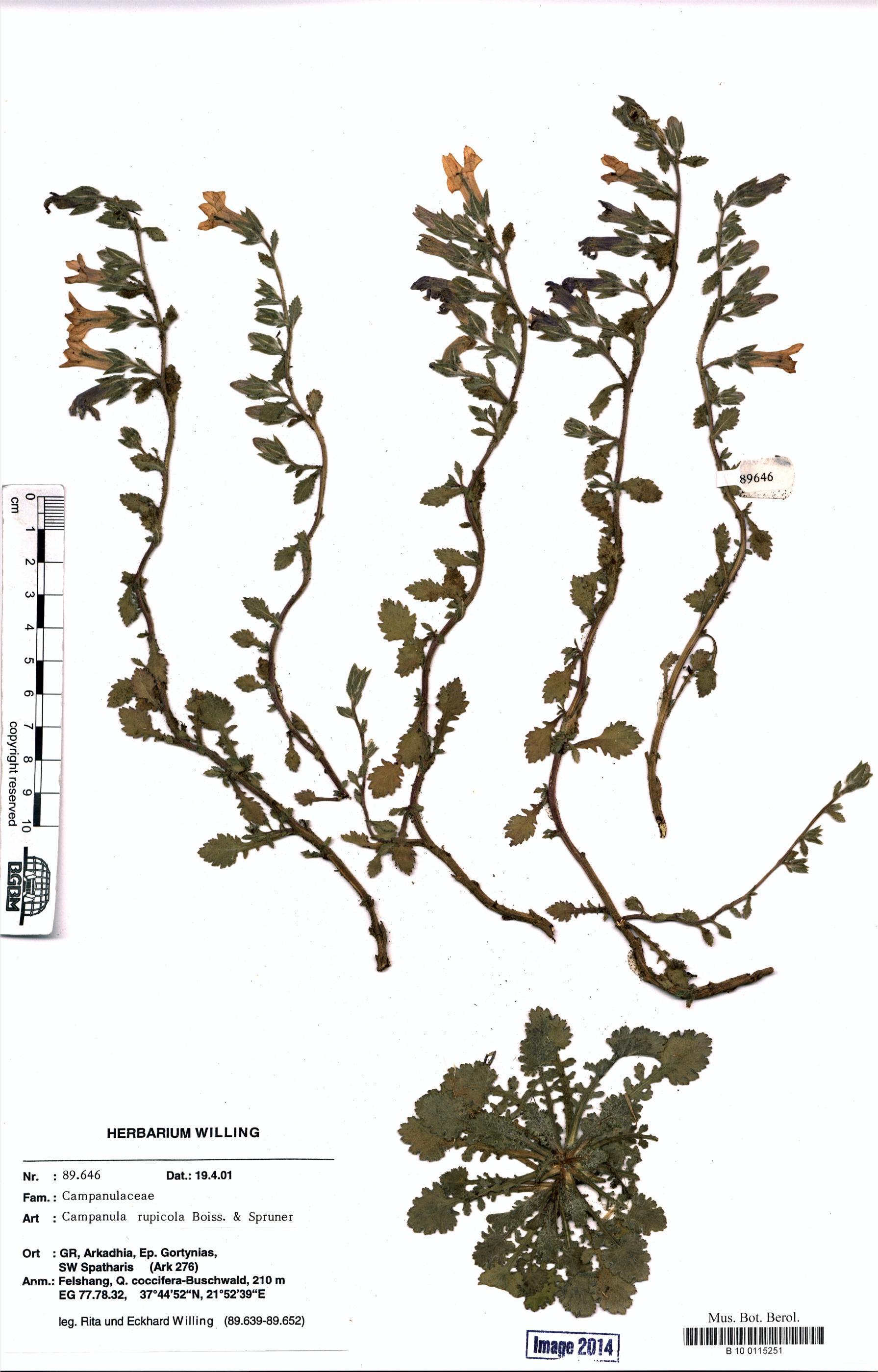http://ww2.bgbm.org/herbarium/images/B/10/01/15/25/B_10_0115251.jpg