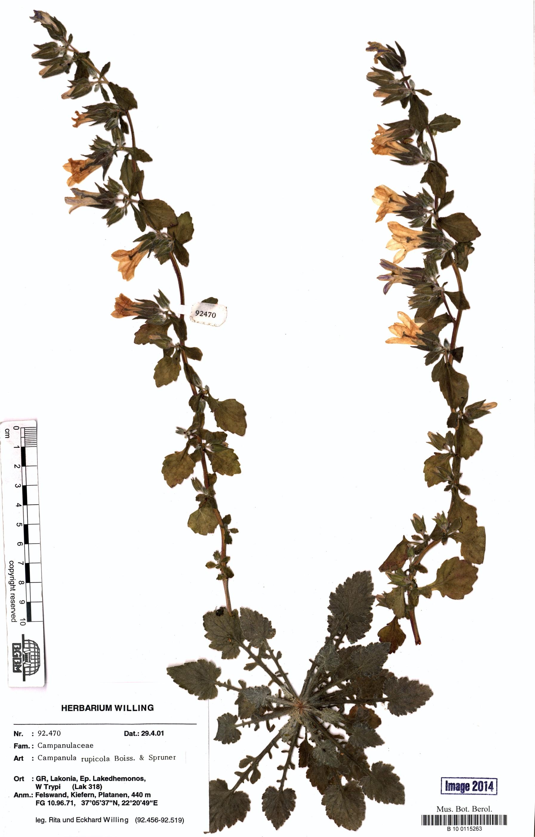 http://ww2.bgbm.org/herbarium/images/B/10/01/15/26/B_10_0115263.jpg