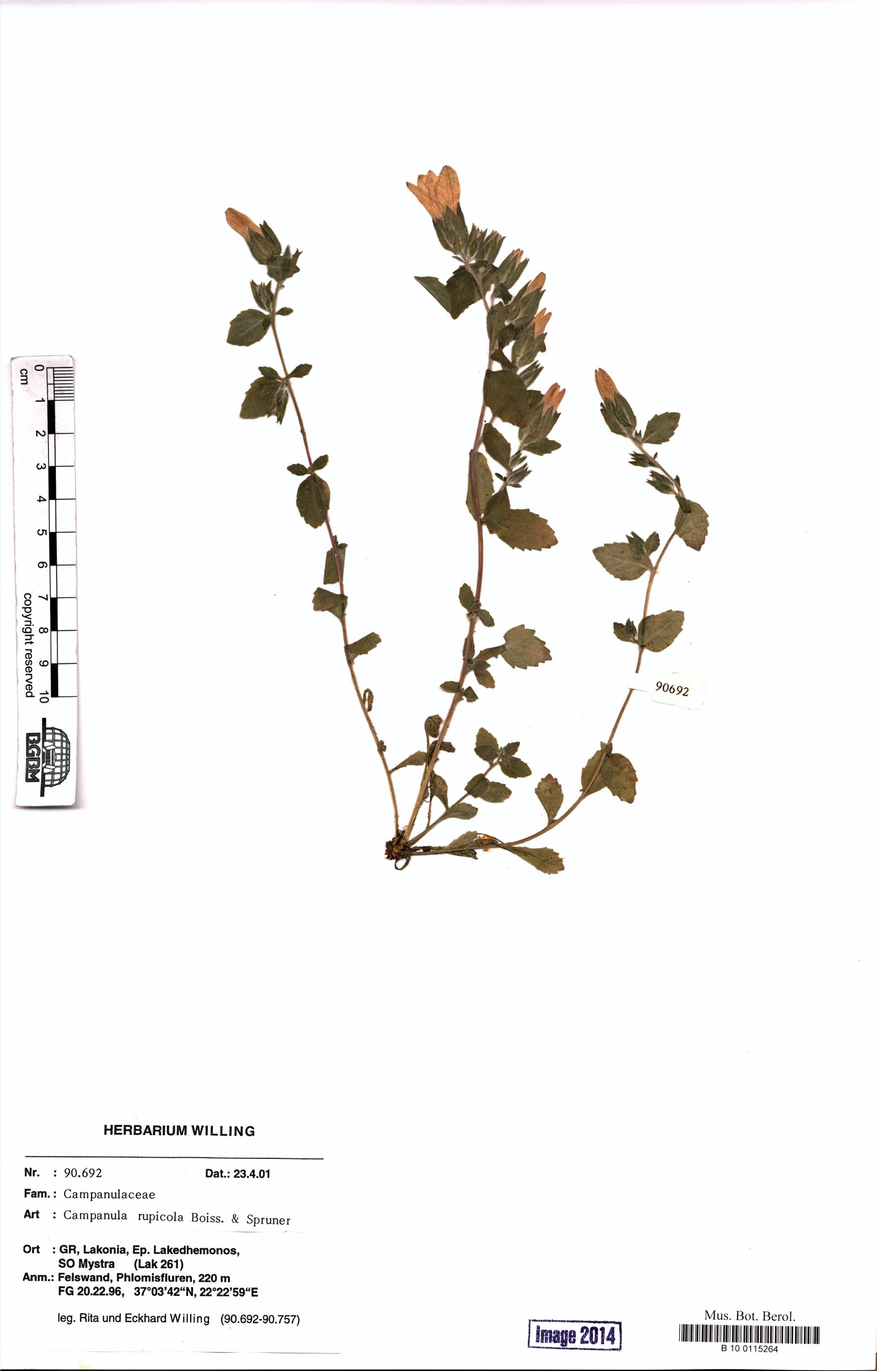 http://ww2.bgbm.org/herbarium/images/B/10/01/15/26/B_10_0115264.jpg