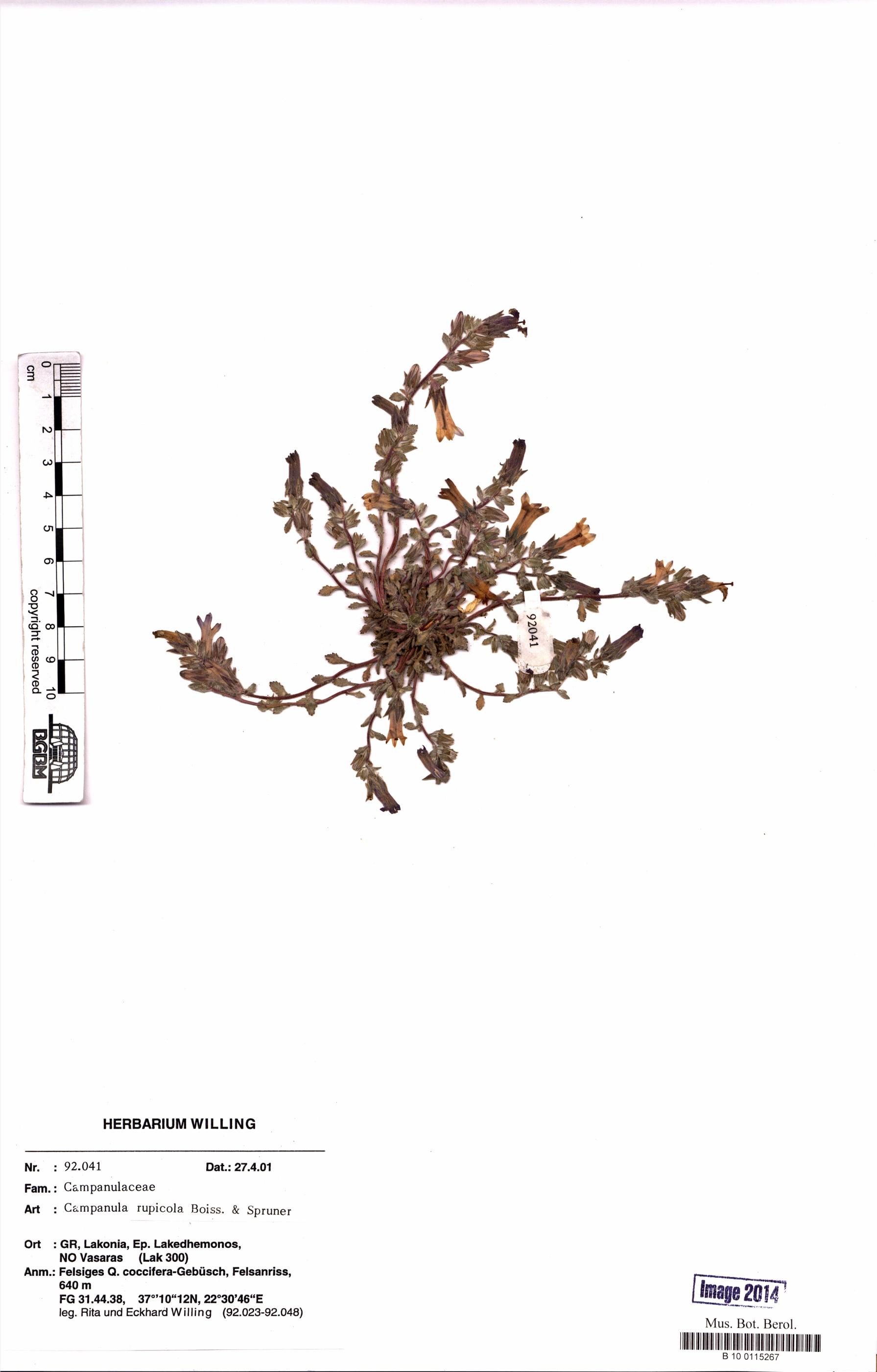http://ww2.bgbm.org/herbarium/images/B/10/01/15/26/B_10_0115267.jpg