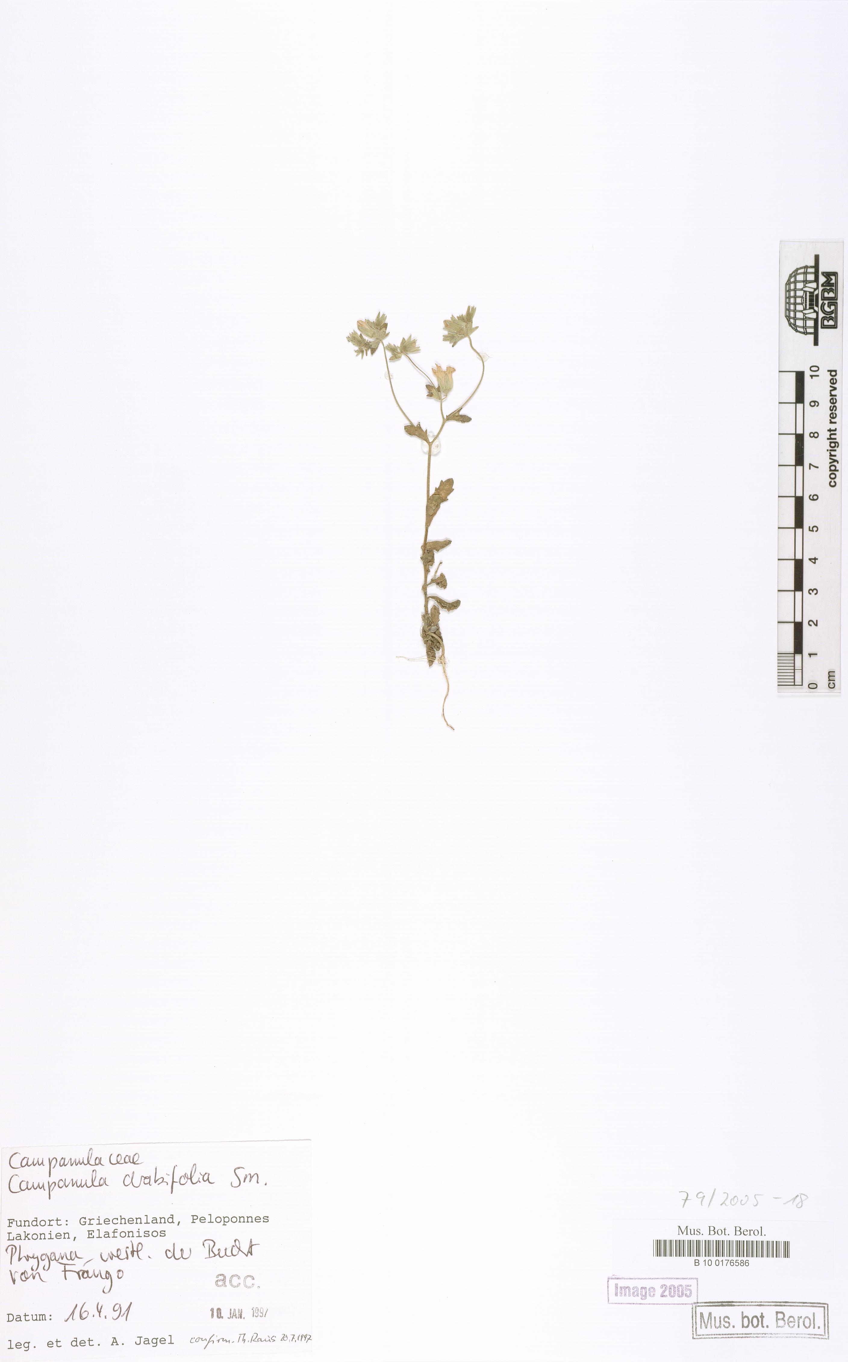 http://ww2.bgbm.org/herbarium/images/B/10/01/76/58/B_10_0176586.jpg