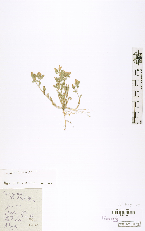 http://ww2.bgbm.org/herbarium/images/B/10/01/76/58/B_10_0176587.jpg