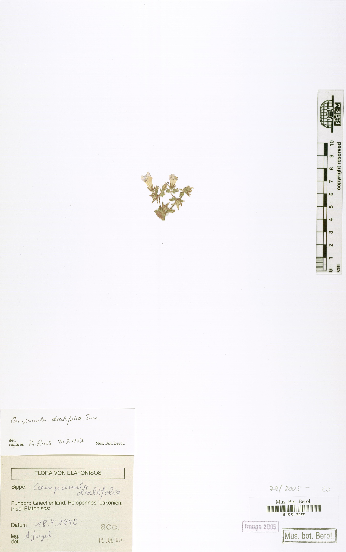 http://ww2.bgbm.org/herbarium/images/B/10/01/76/58/B_10_0176588.jpg