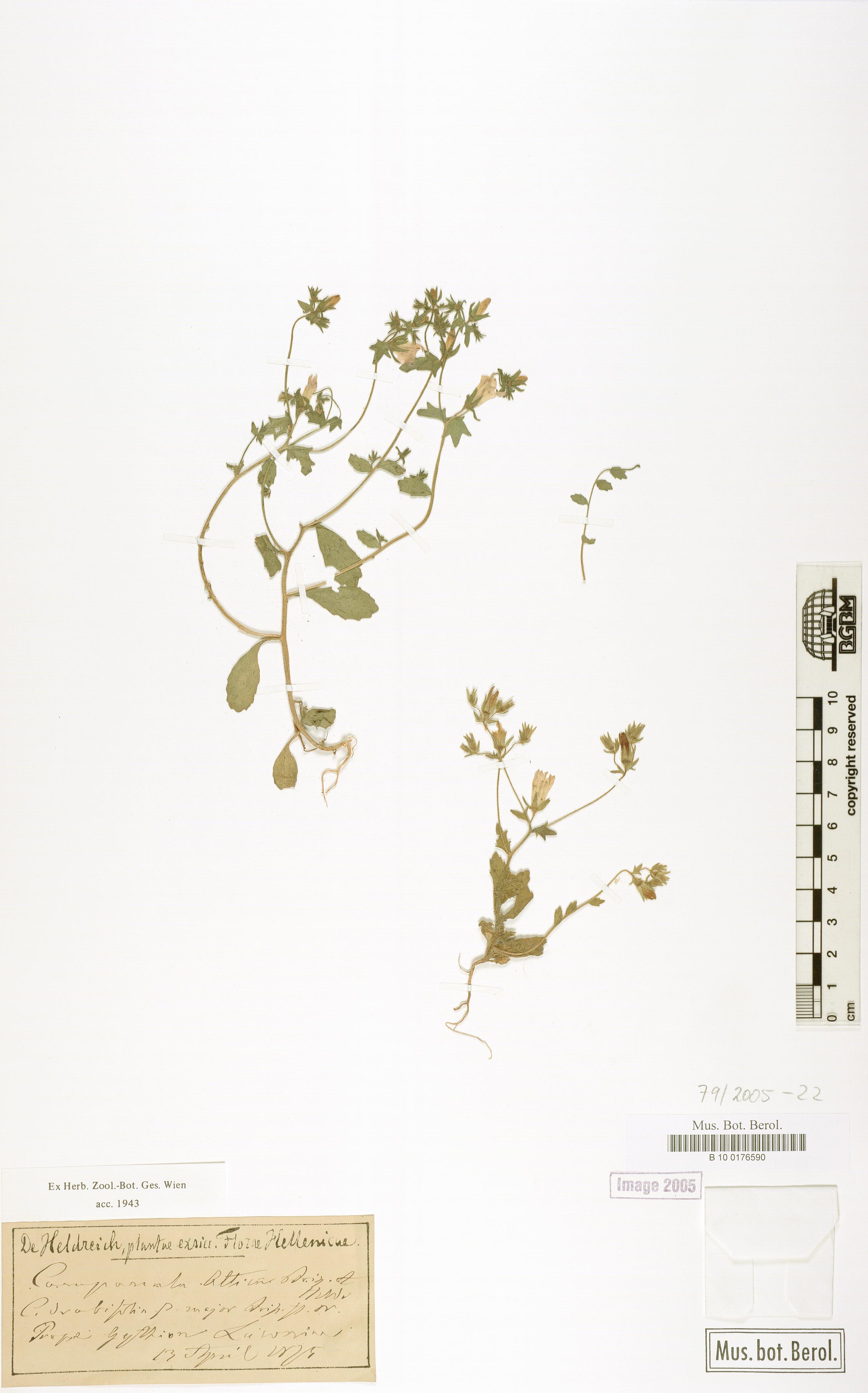 http://ww2.bgbm.org/herbarium/images/B/10/01/76/59/B_10_0176590.jpg