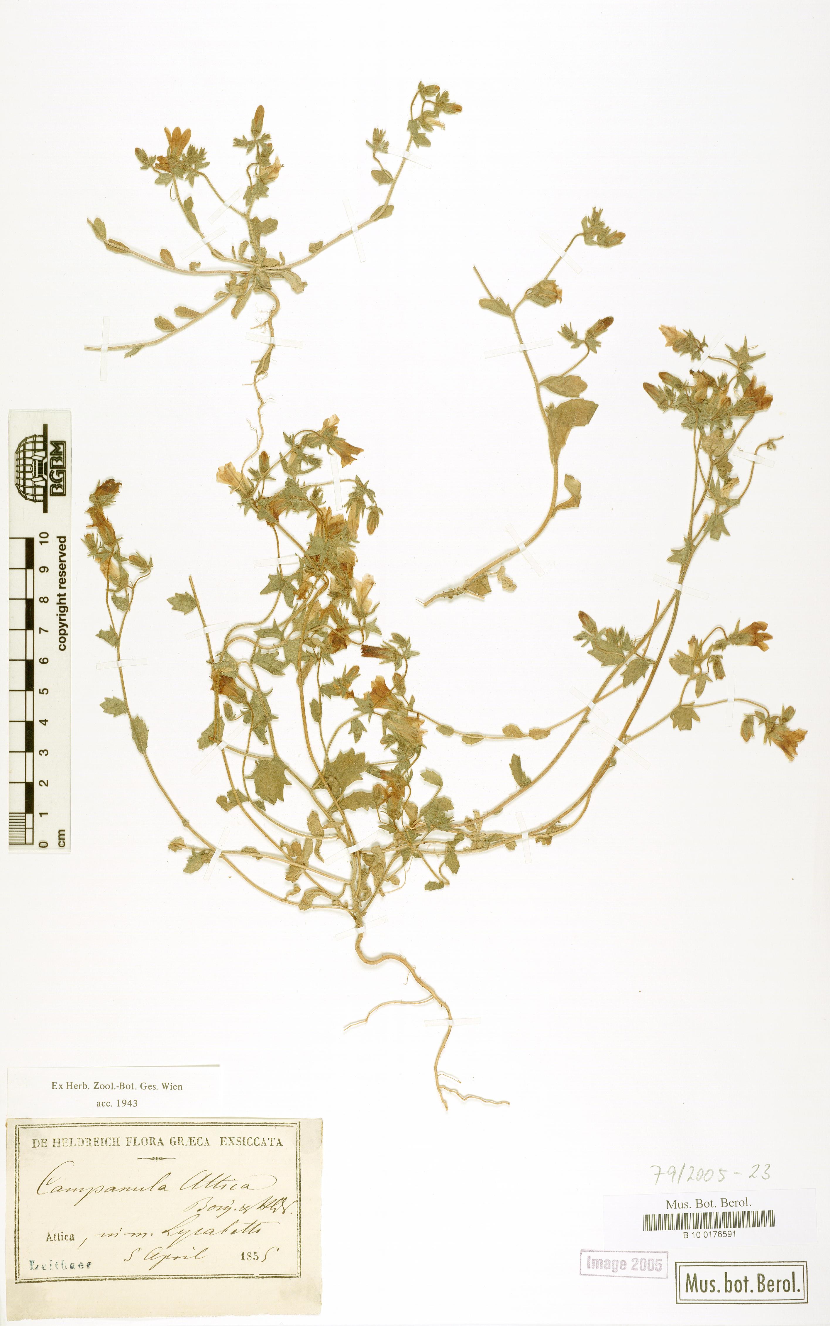 http://ww2.bgbm.org/herbarium/images/B/10/01/76/59/B_10_0176591.jpg