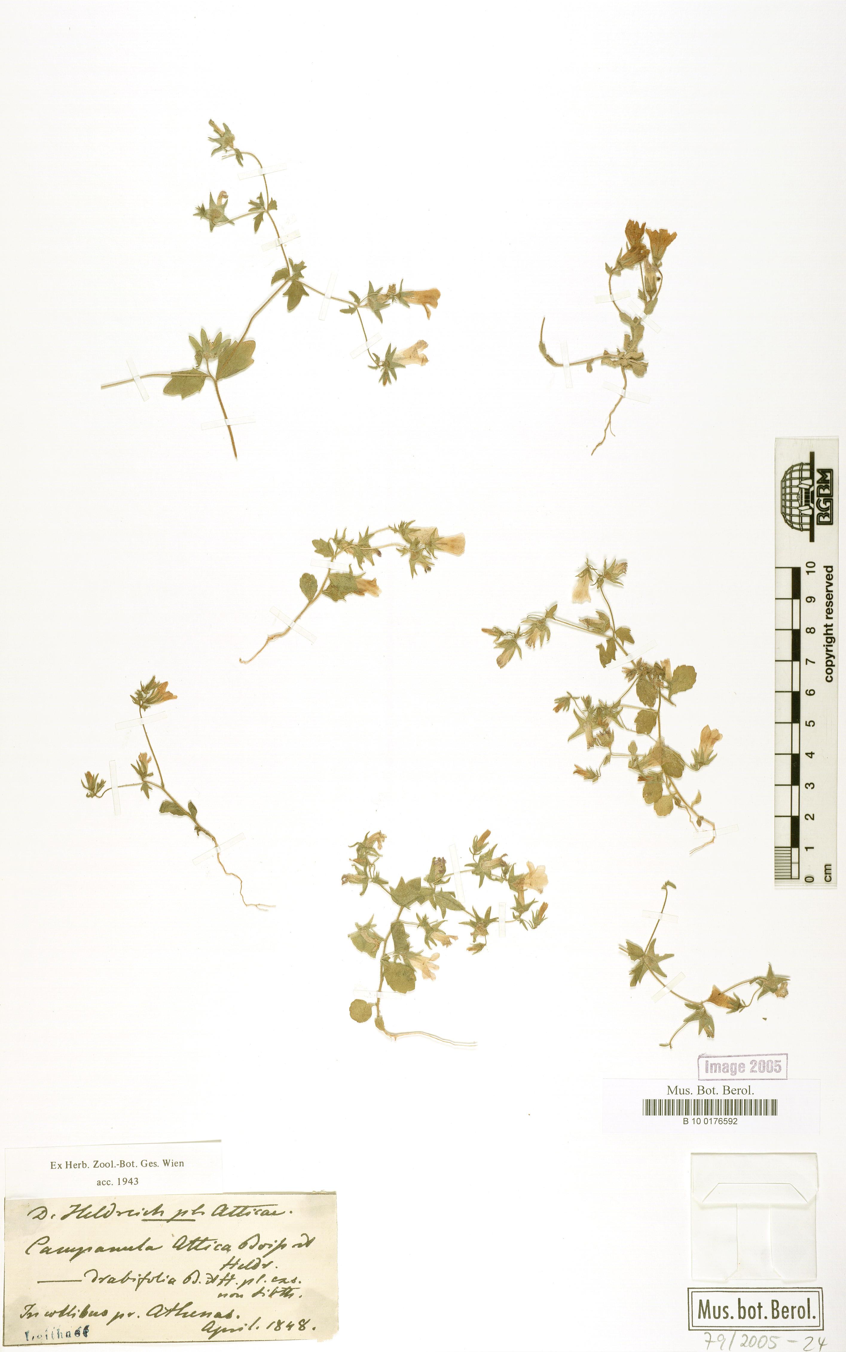 http://ww2.bgbm.org/herbarium/images/B/10/01/76/59/B_10_0176592.jpg