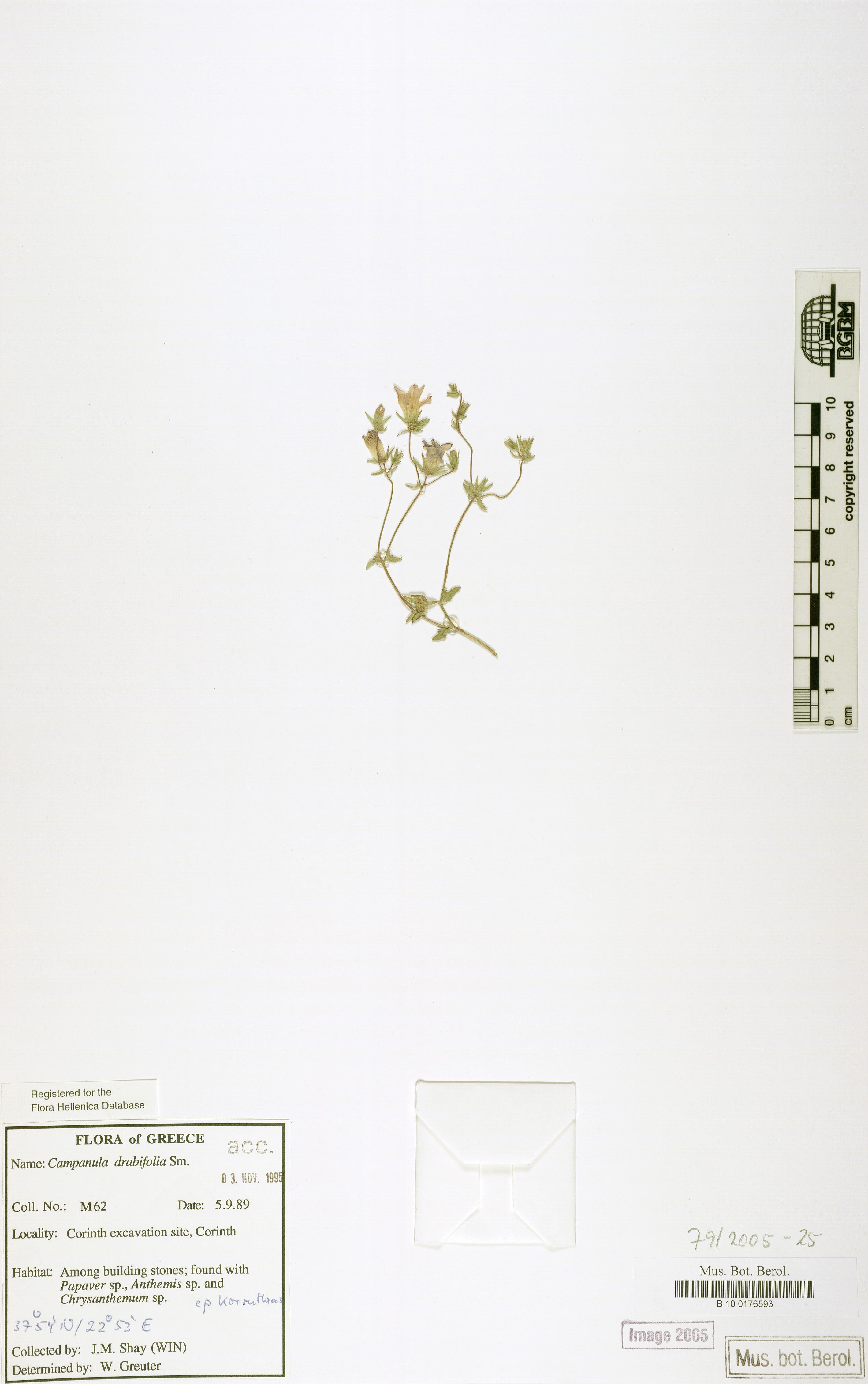 http://ww2.bgbm.org/herbarium/images/B/10/01/76/59/B_10_0176593.jpg