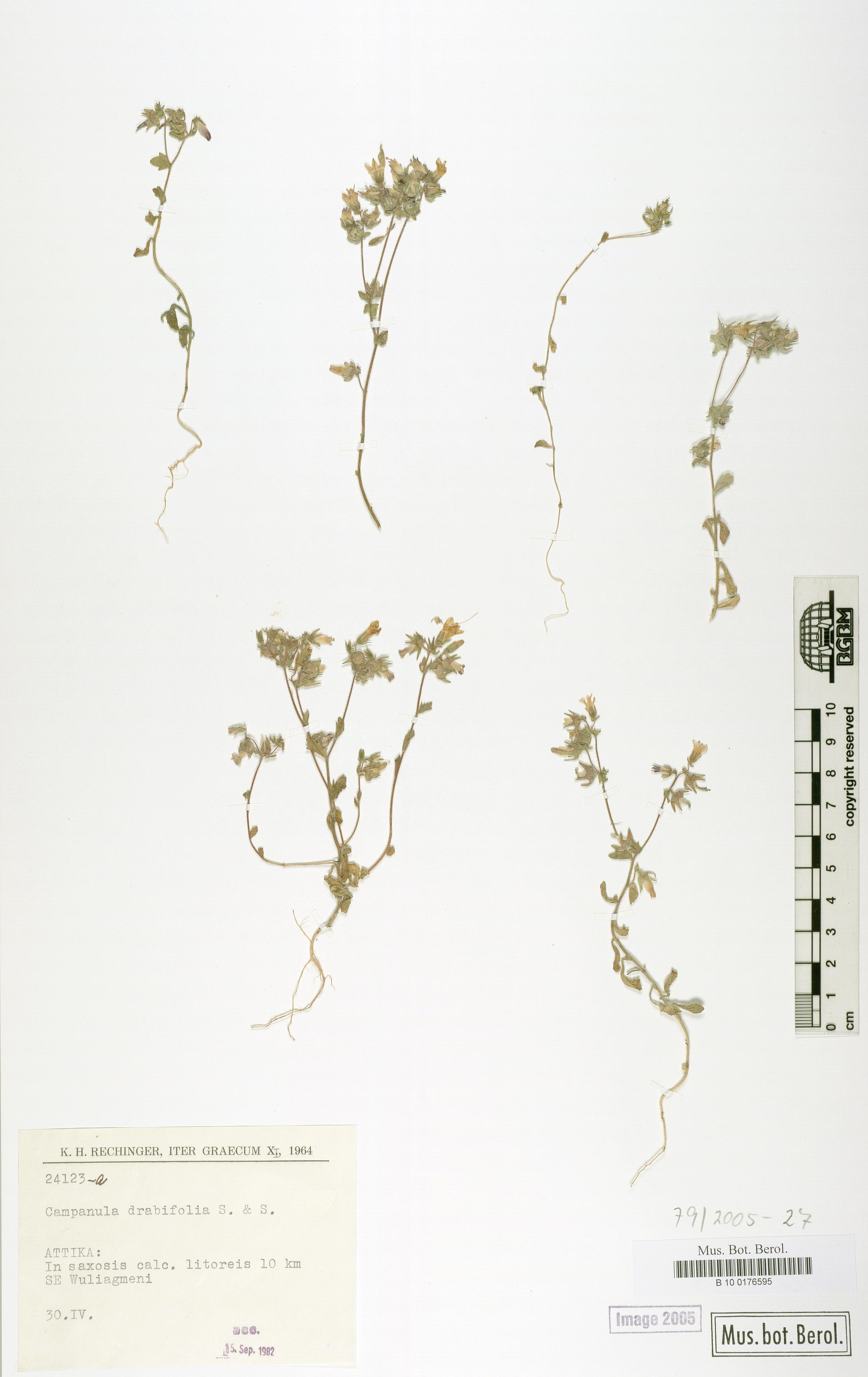 http://ww2.bgbm.org/herbarium/images/B/10/01/76/59/B_10_0176595.jpg