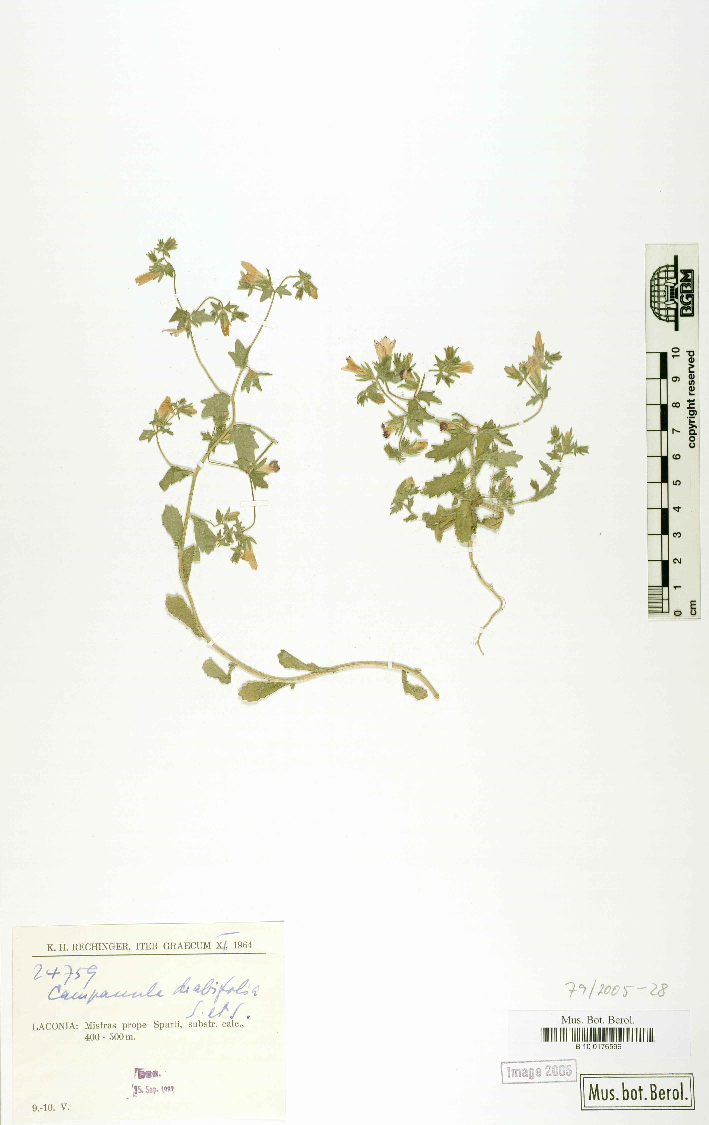 http://ww2.bgbm.org/herbarium/images/B/10/01/76/59/B_10_0176596.jpg