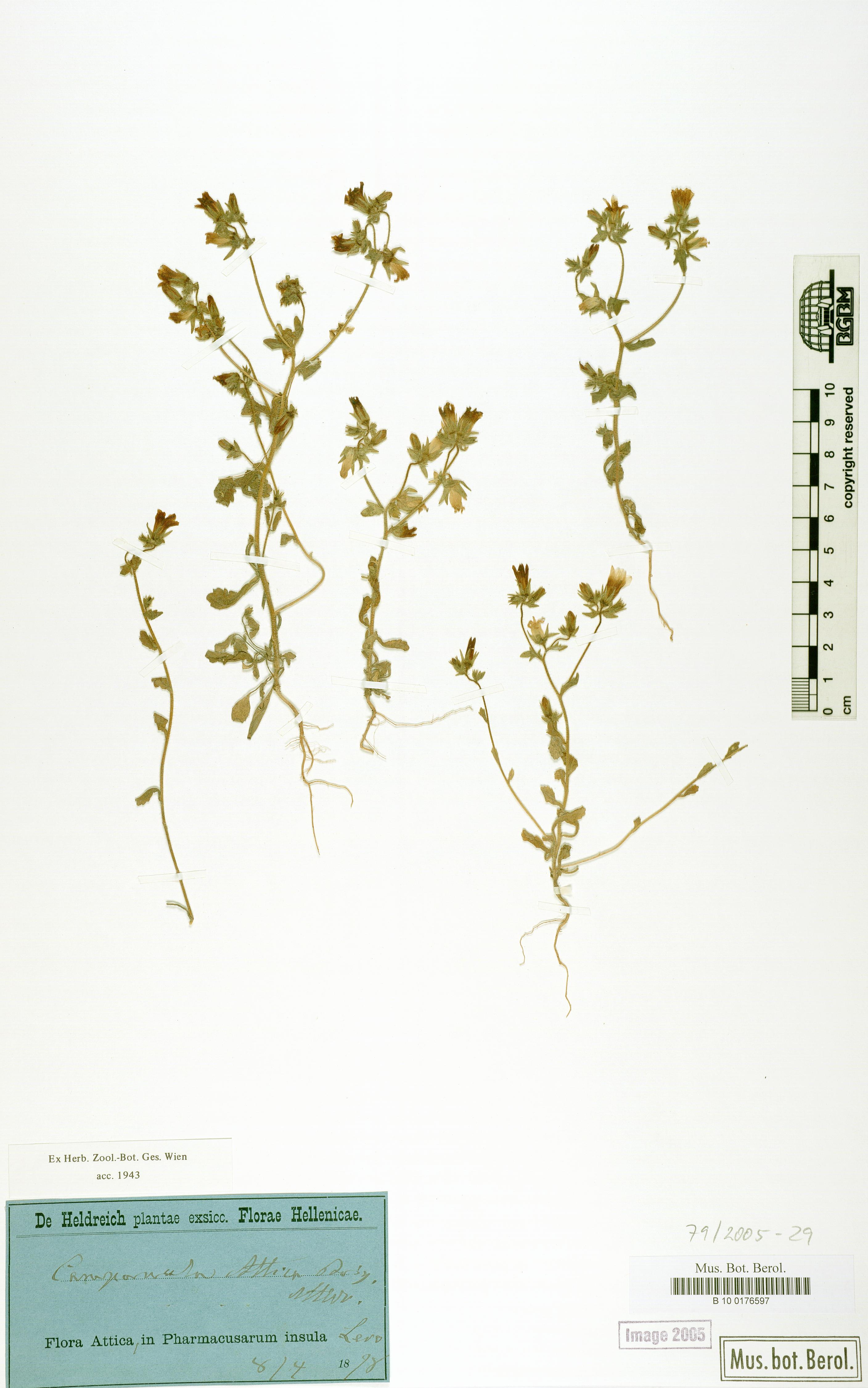 http://ww2.bgbm.org/herbarium/images/B/10/01/76/59/B_10_0176597.jpg