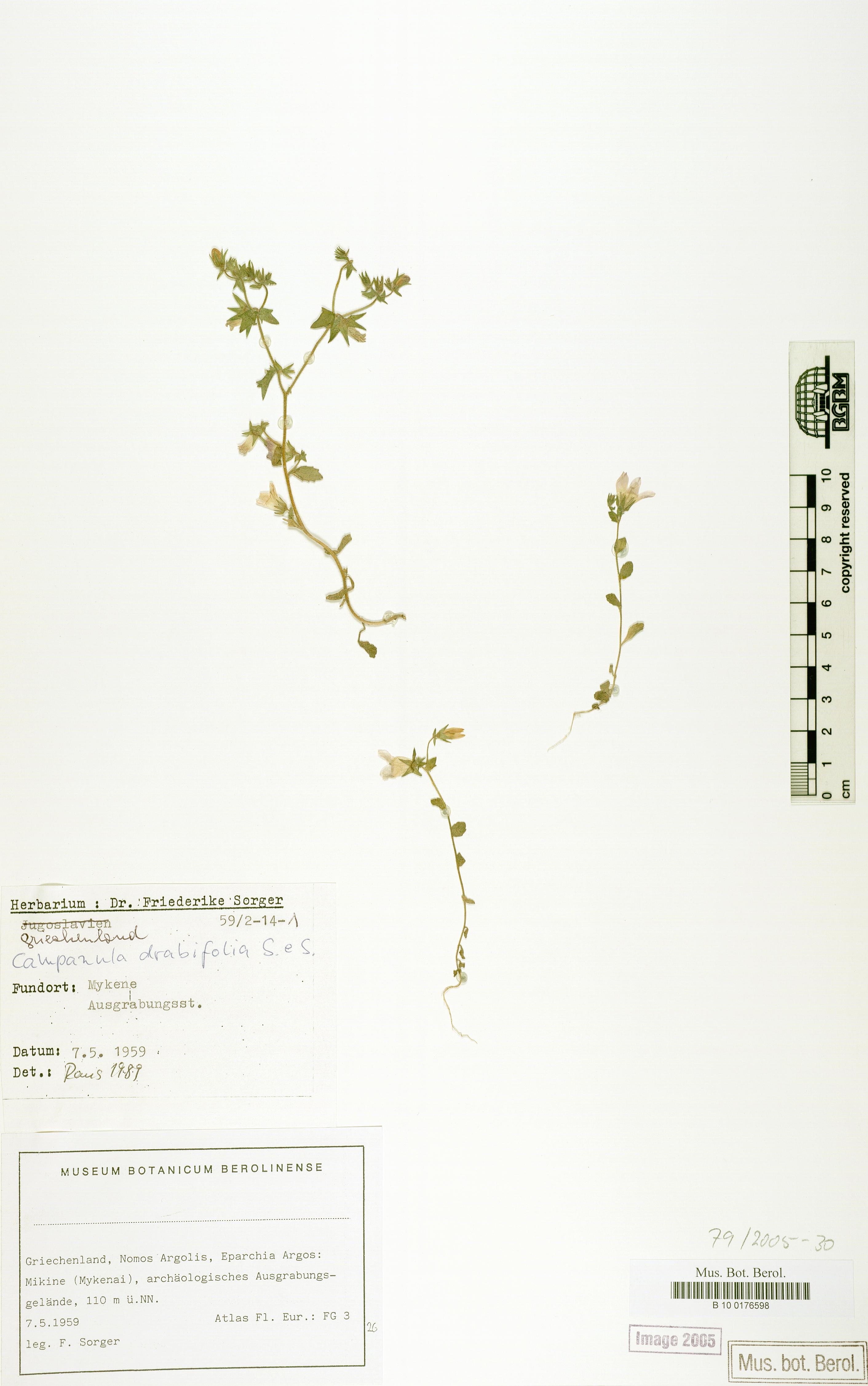 http://ww2.bgbm.org/herbarium/images/B/10/01/76/59/B_10_0176598.jpg