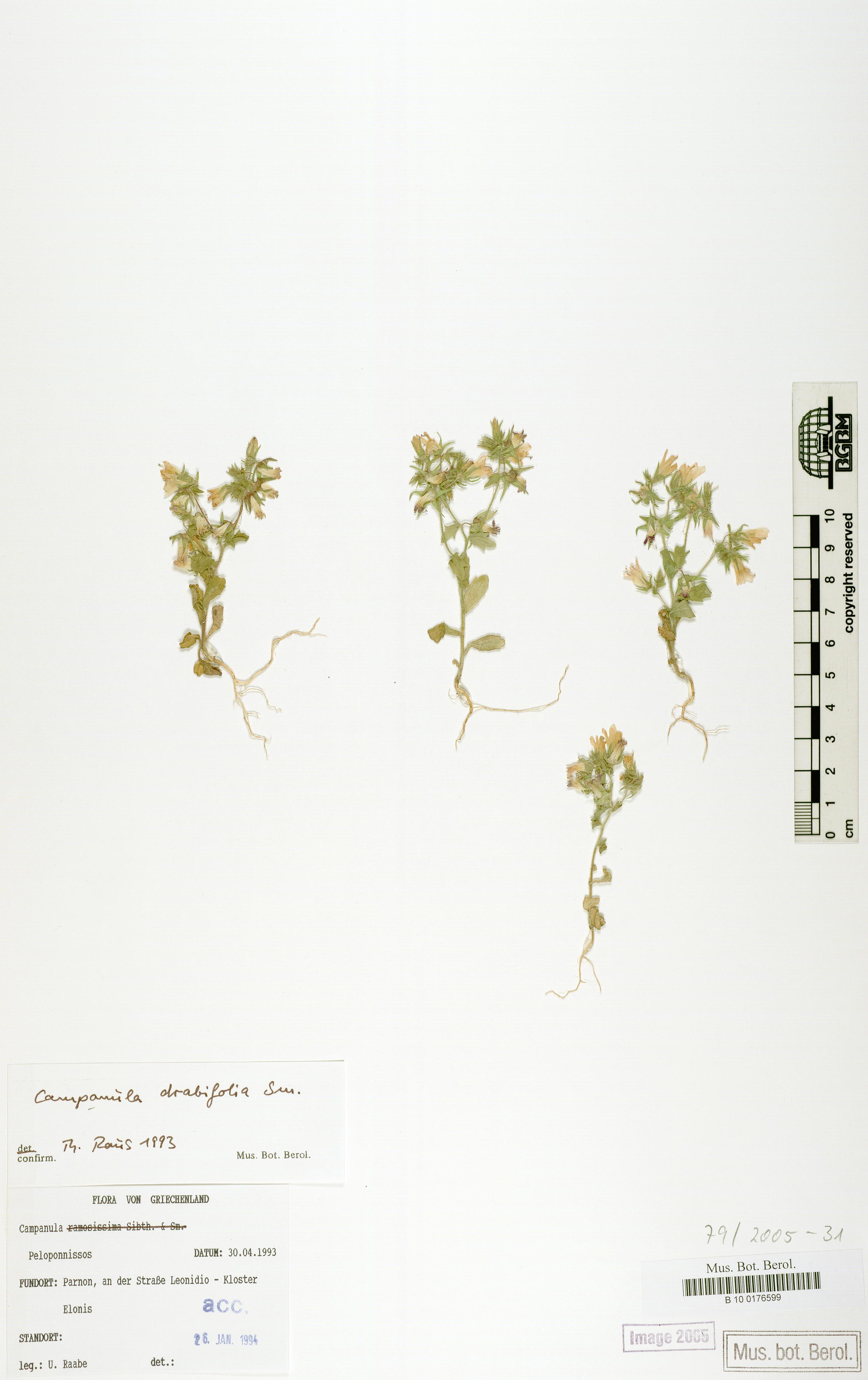 http://ww2.bgbm.org/herbarium/images/B/10/01/76/59/B_10_0176599.jpg