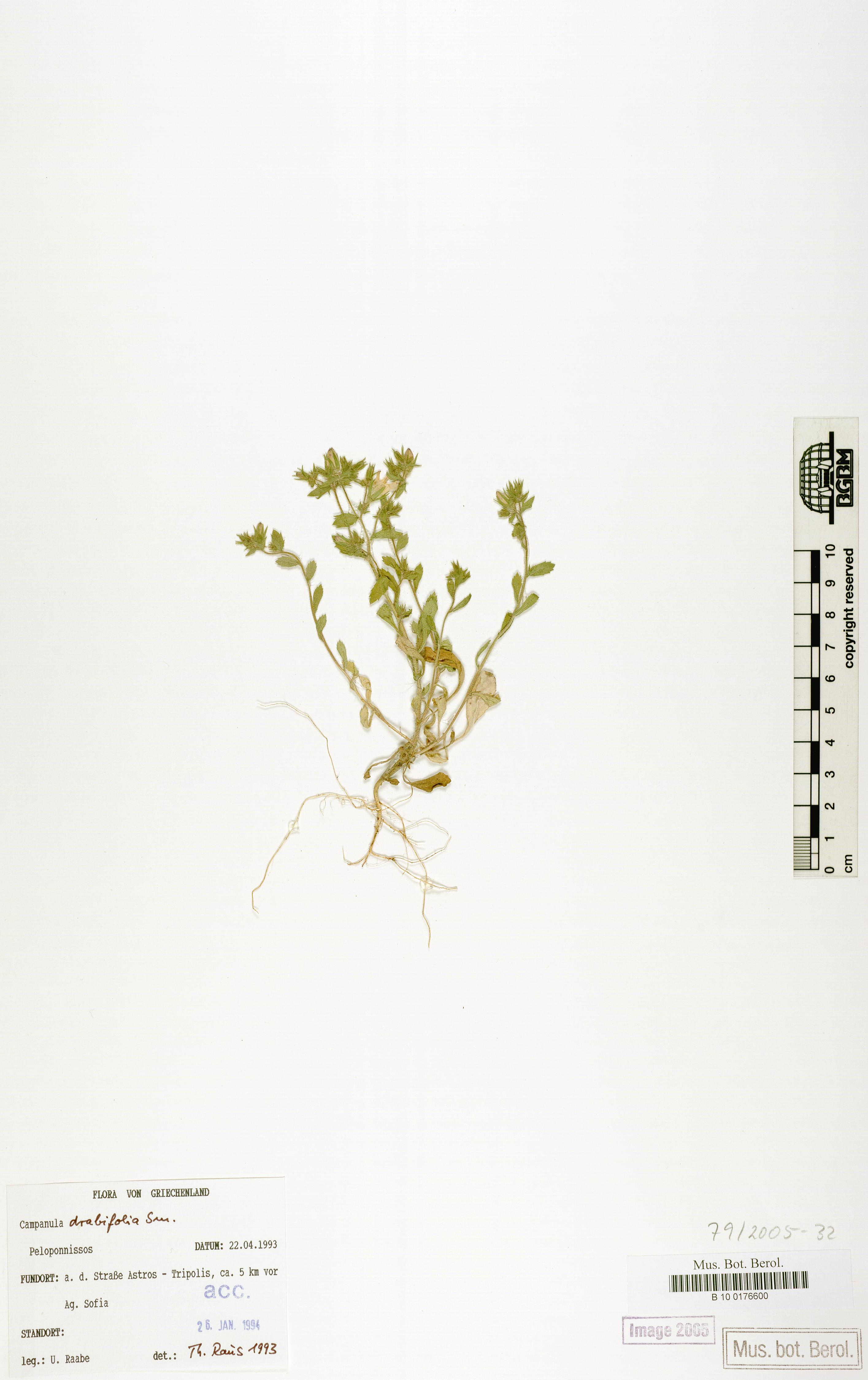 http://ww2.bgbm.org/herbarium/images/B/10/01/76/60/B_10_0176600.jpg