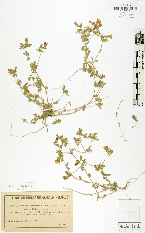 http://ww2.bgbm.org/herbarium/images/B/10/01/76/60/B_10_0176602.jpg