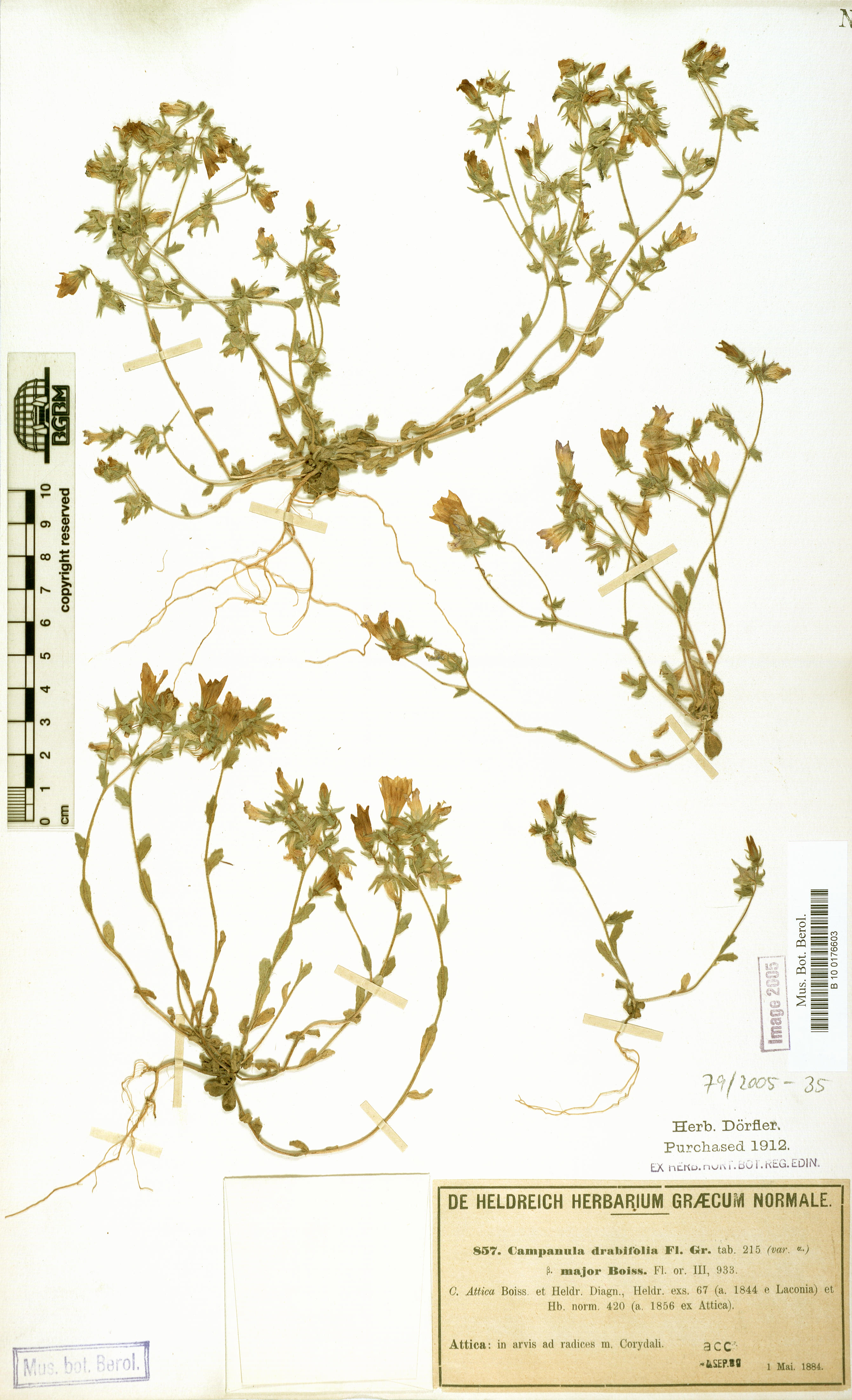 http://ww2.bgbm.org/herbarium/images/B/10/01/76/60/B_10_0176603.jpg