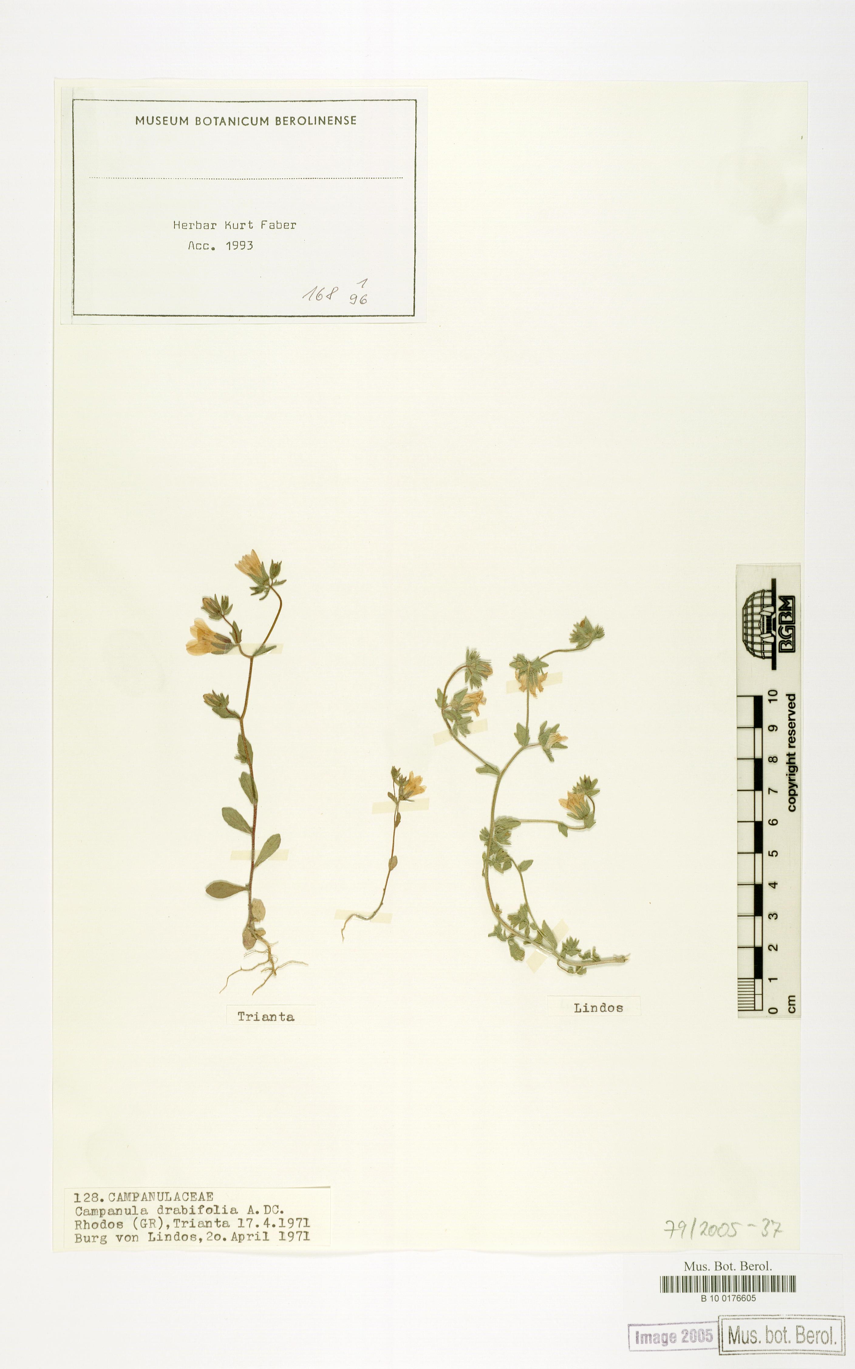 http://ww2.bgbm.org/herbarium/images/B/10/01/76/60/B_10_0176605.jpg