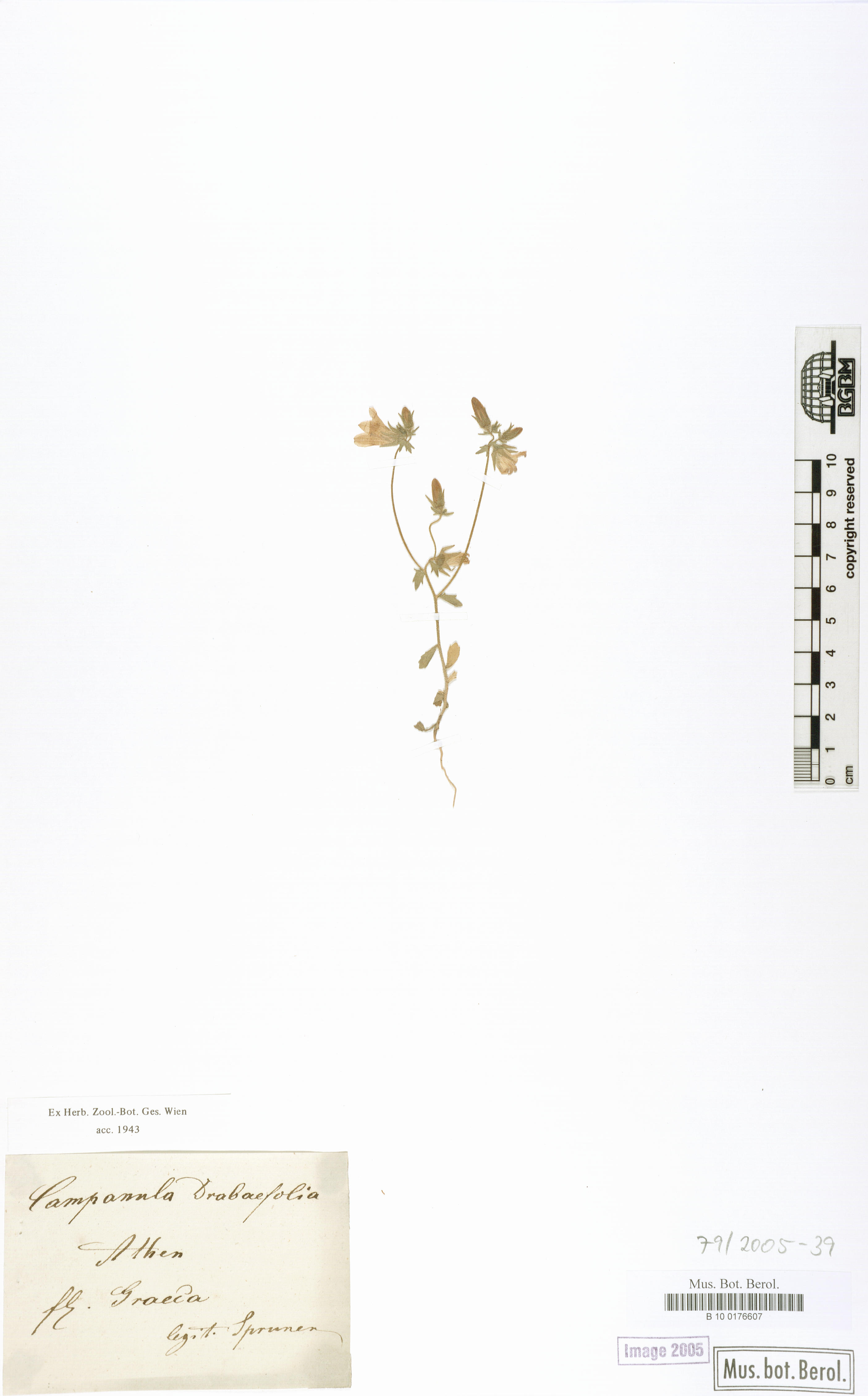 http://ww2.bgbm.org/herbarium/images/B/10/01/76/60/B_10_0176607.jpg