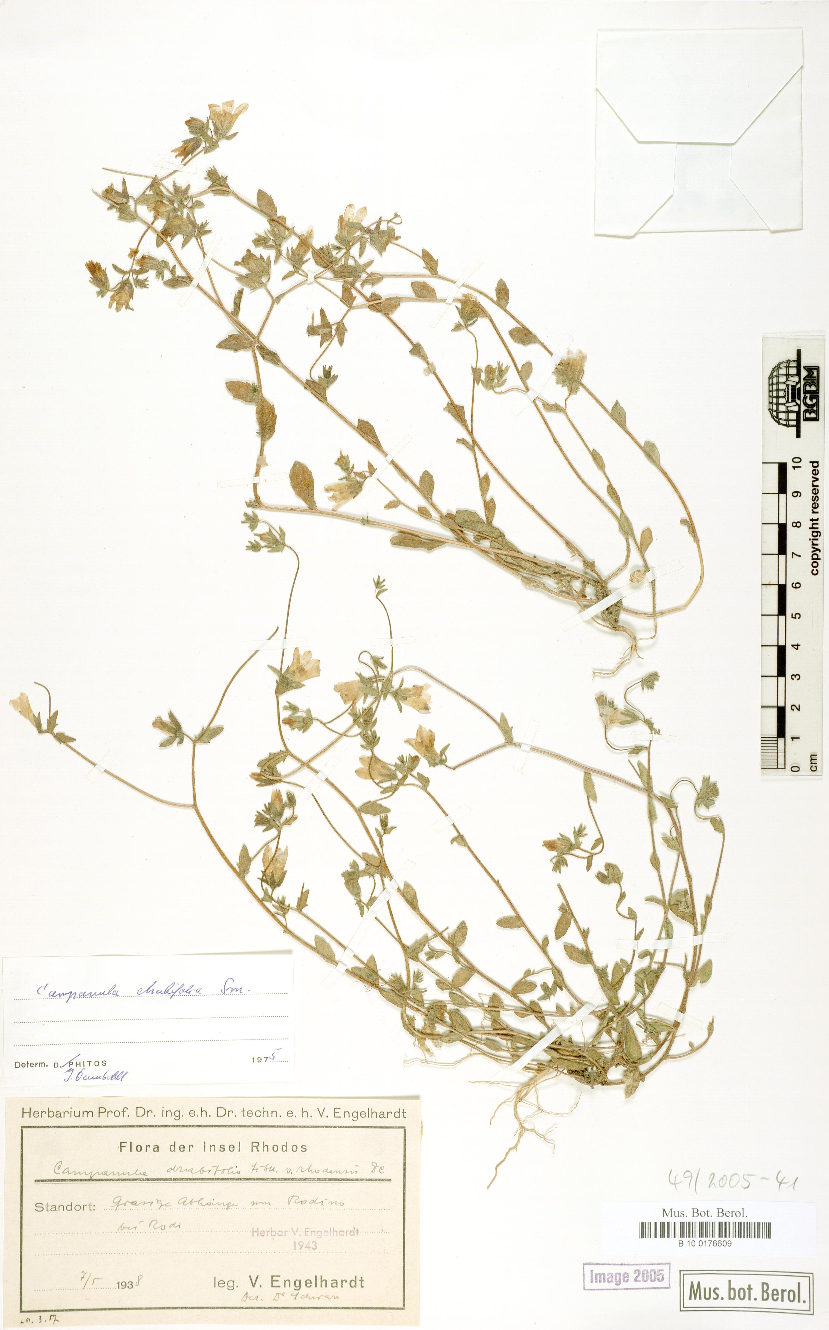 http://ww2.bgbm.org/herbarium/images/B/10/01/76/60/B_10_0176609.jpg