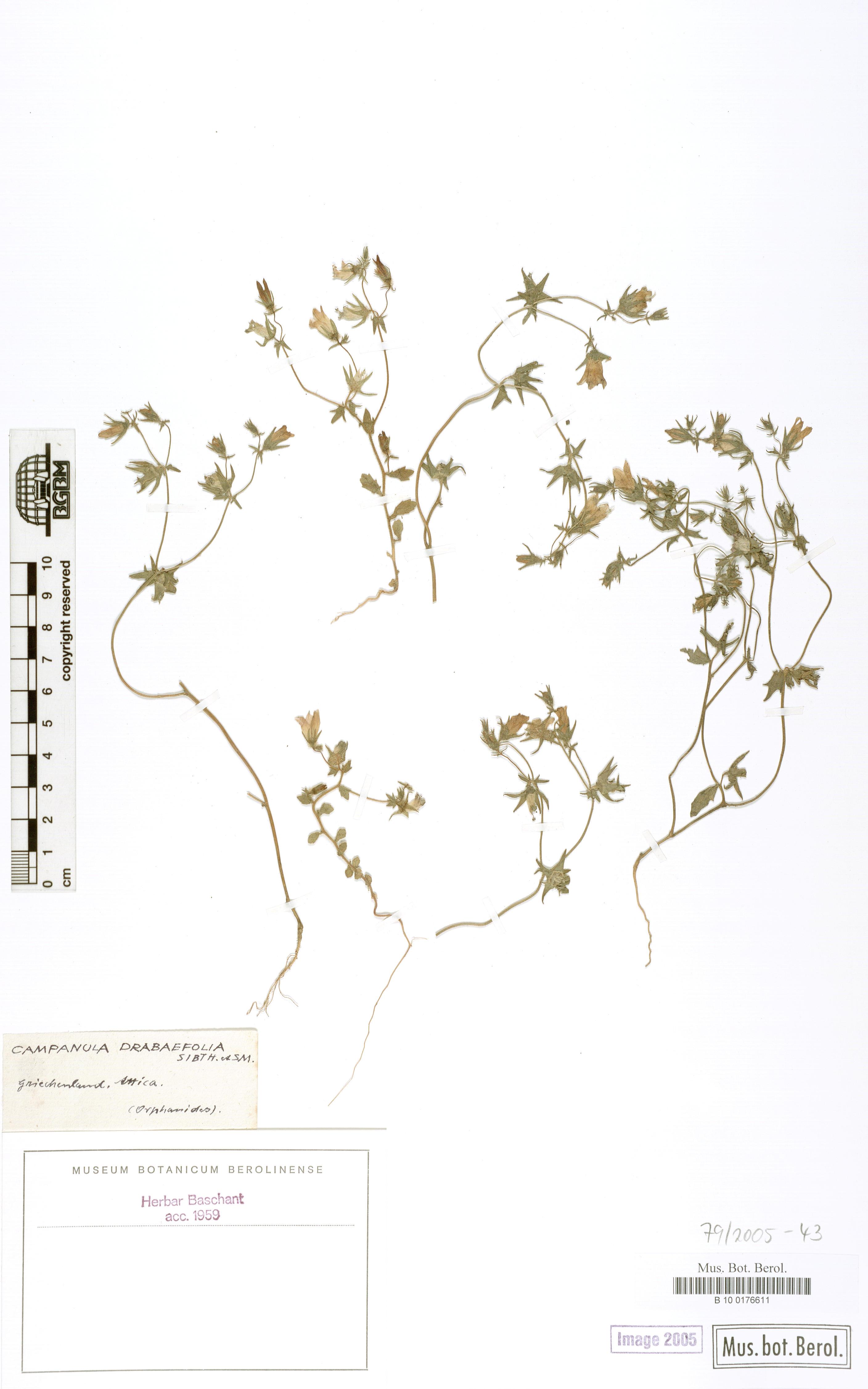 http://ww2.bgbm.org/herbarium/images/B/10/01/76/61/B_10_0176611.jpg
