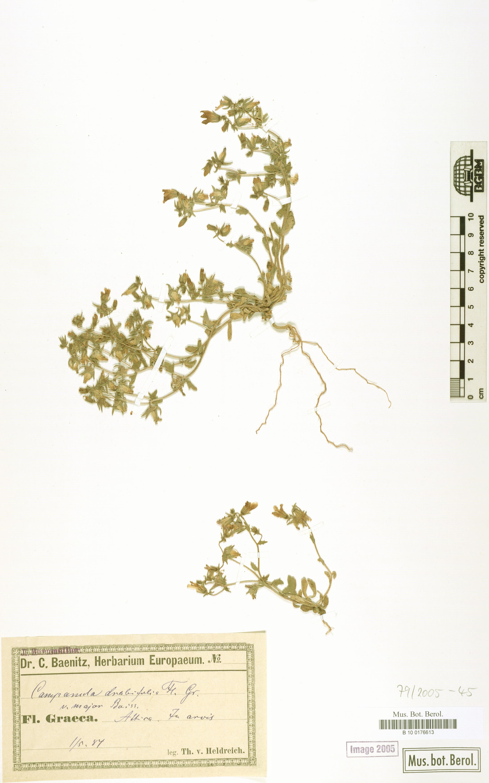 http://ww2.bgbm.org/herbarium/images/B/10/01/76/61/B_10_0176613.jpg