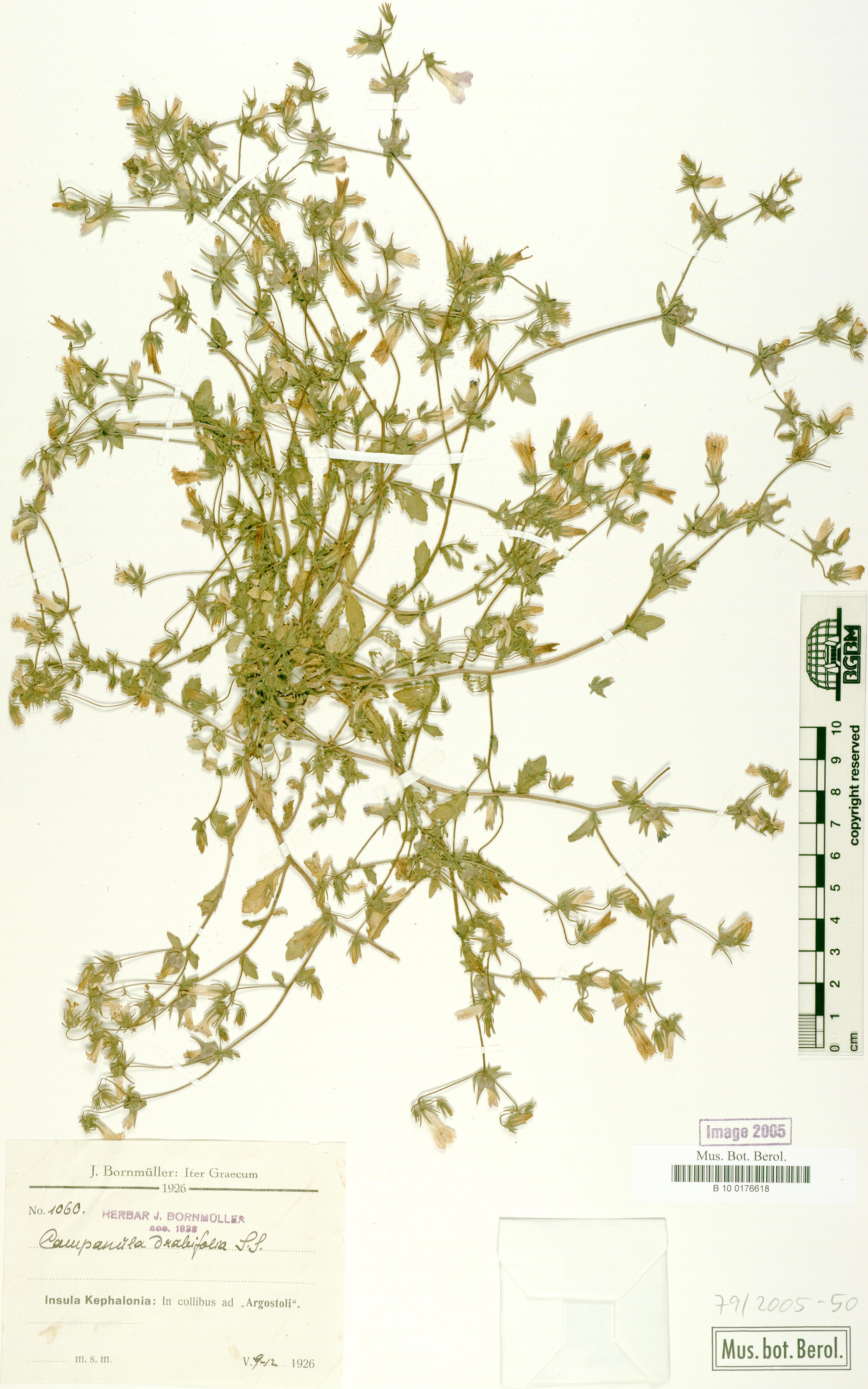http://ww2.bgbm.org/herbarium/images/B/10/01/76/61/B_10_0176618.jpg