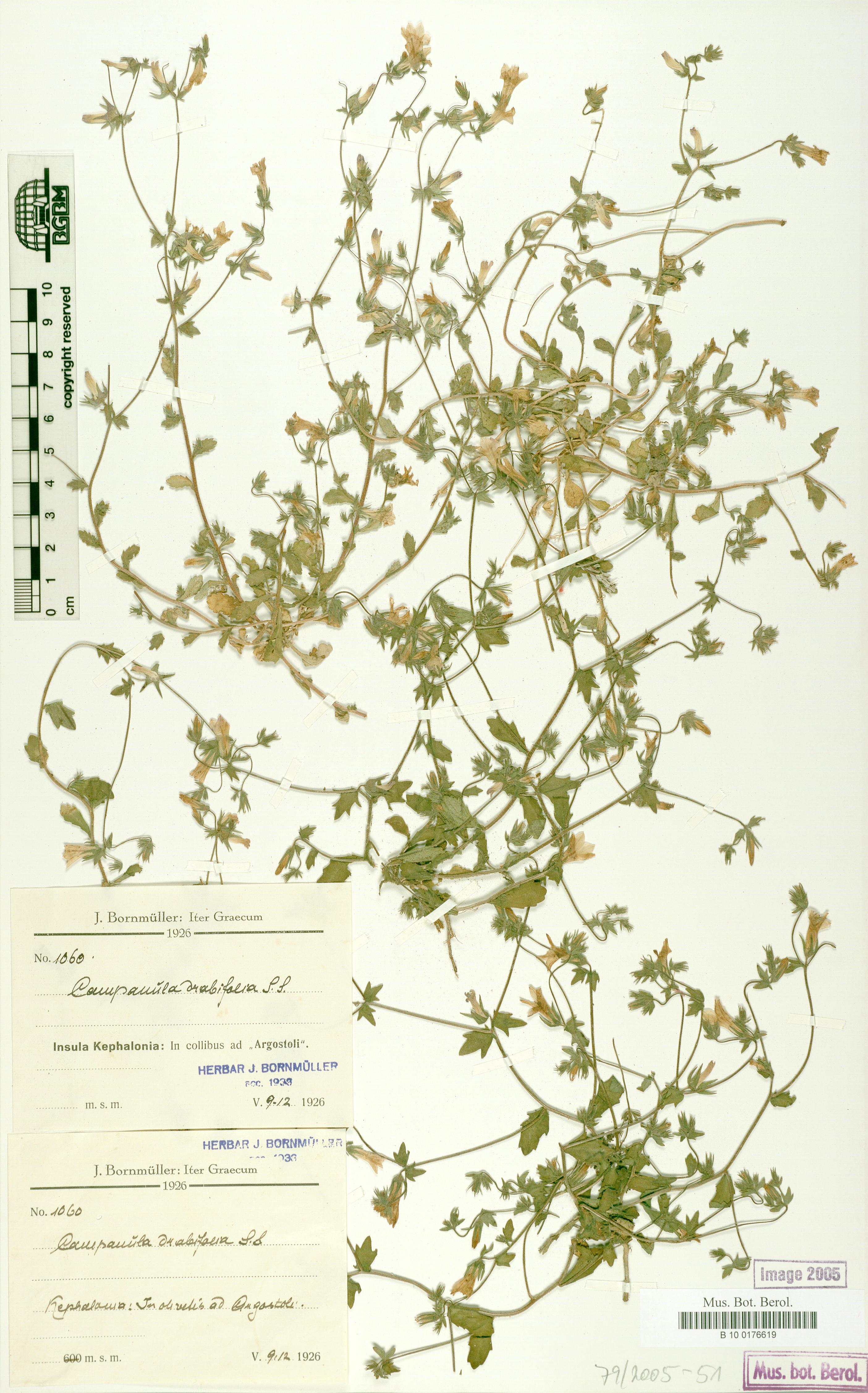 http://ww2.bgbm.org/herbarium/images/B/10/01/76/61/B_10_0176619.jpg