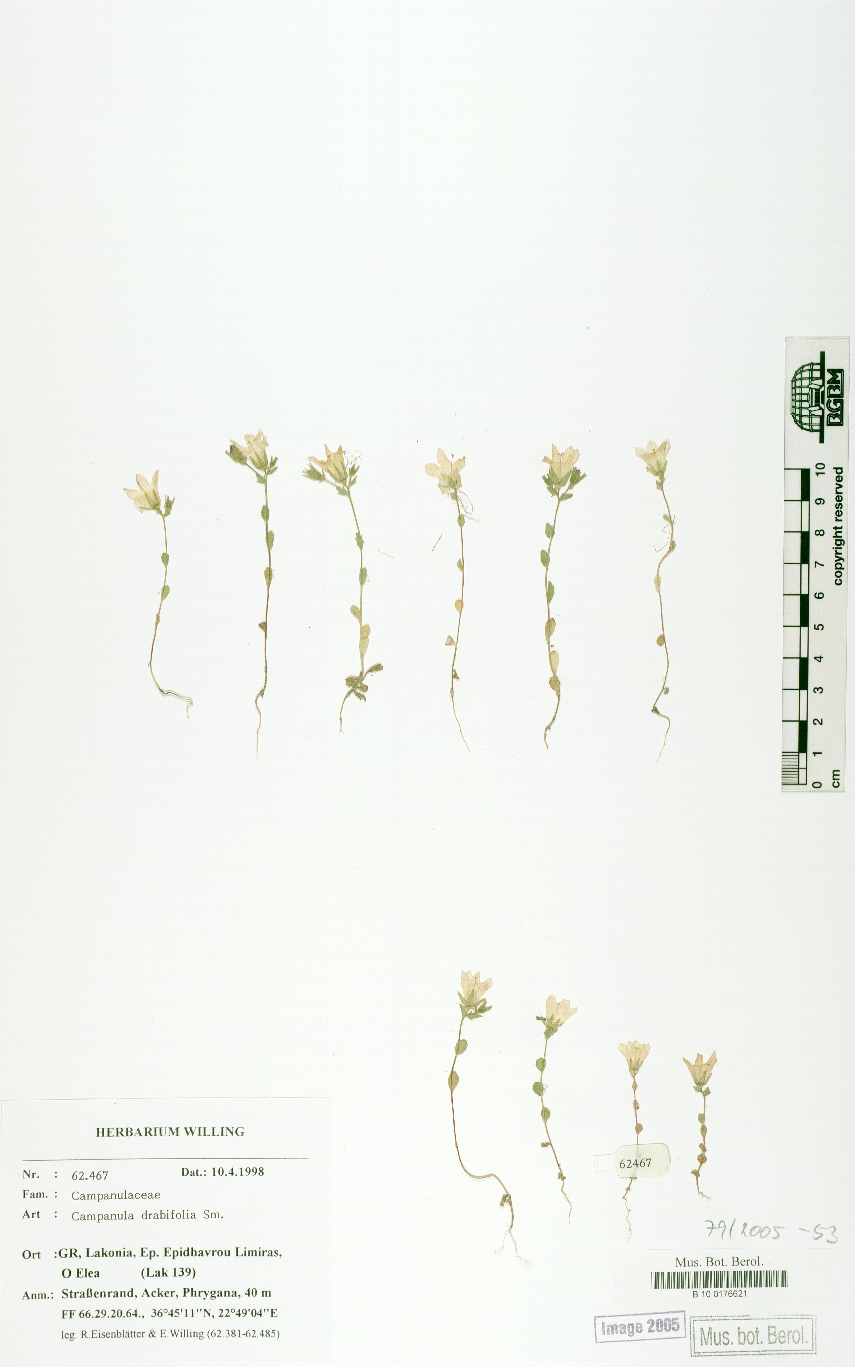 http://ww2.bgbm.org/herbarium/images/B/10/01/76/62/B_10_0176621.jpg
