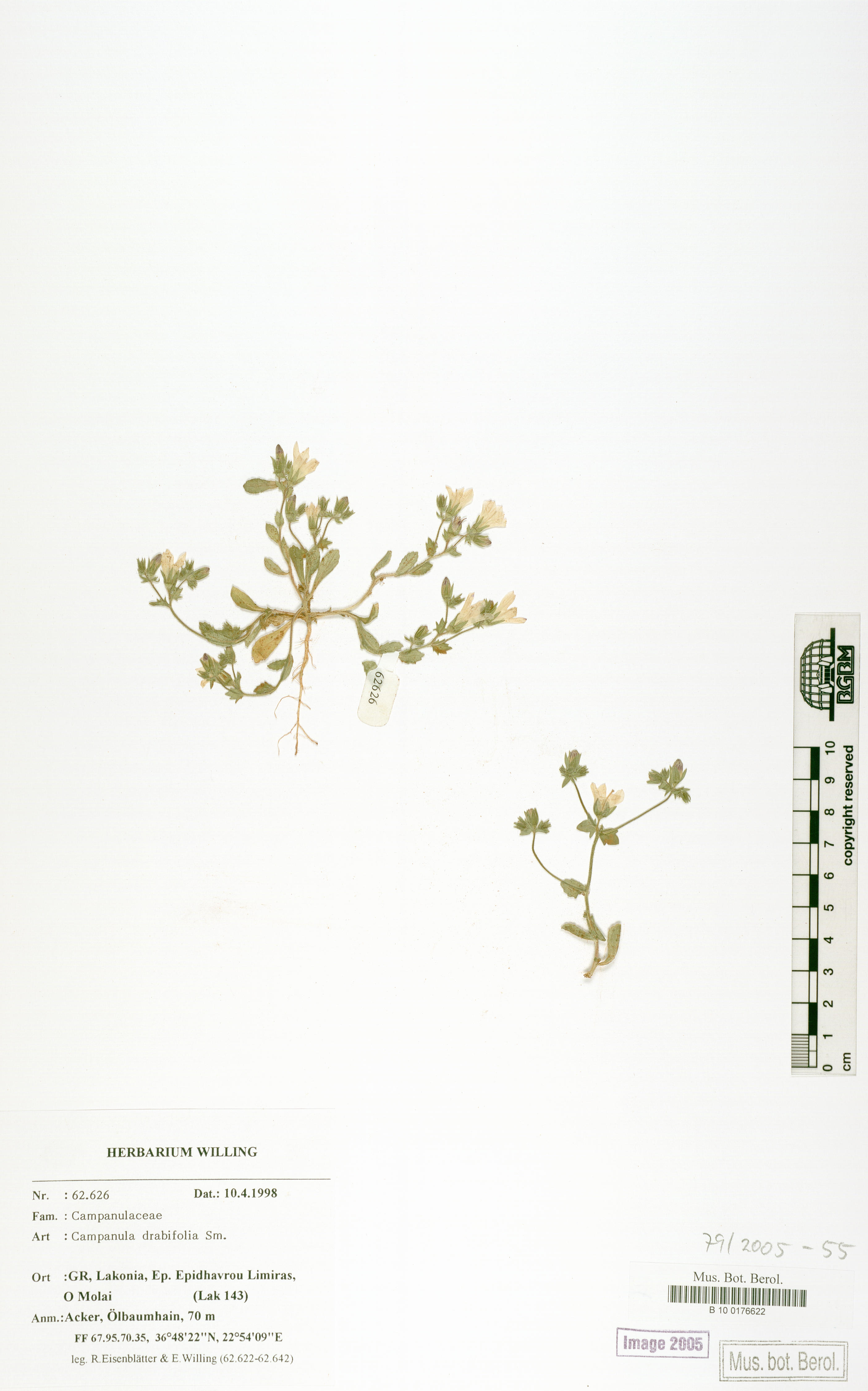 http://ww2.bgbm.org/herbarium/images/B/10/01/76/62/B_10_0176622.jpg