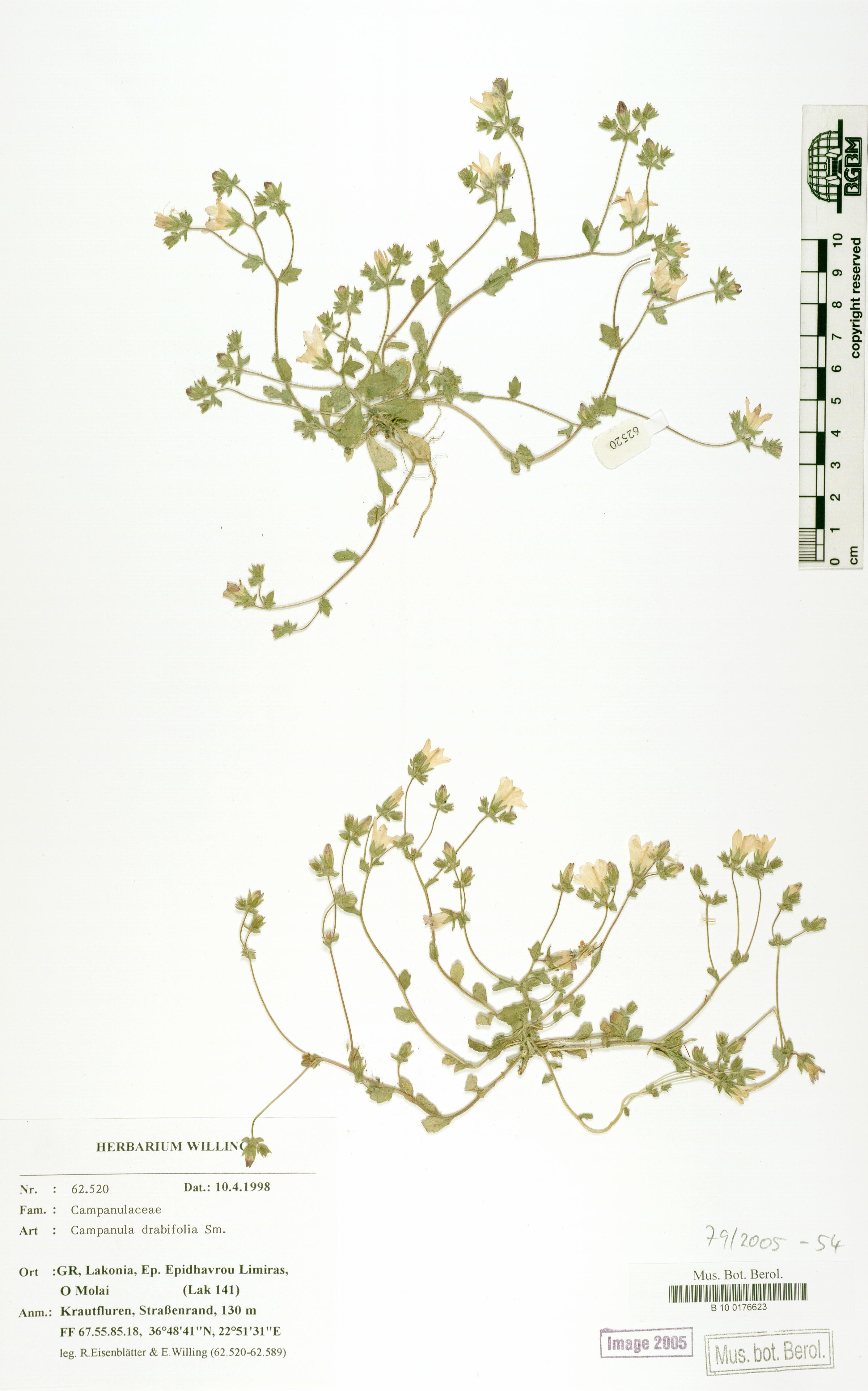 http://ww2.bgbm.org/herbarium/images/B/10/01/76/62/B_10_0176623.jpg