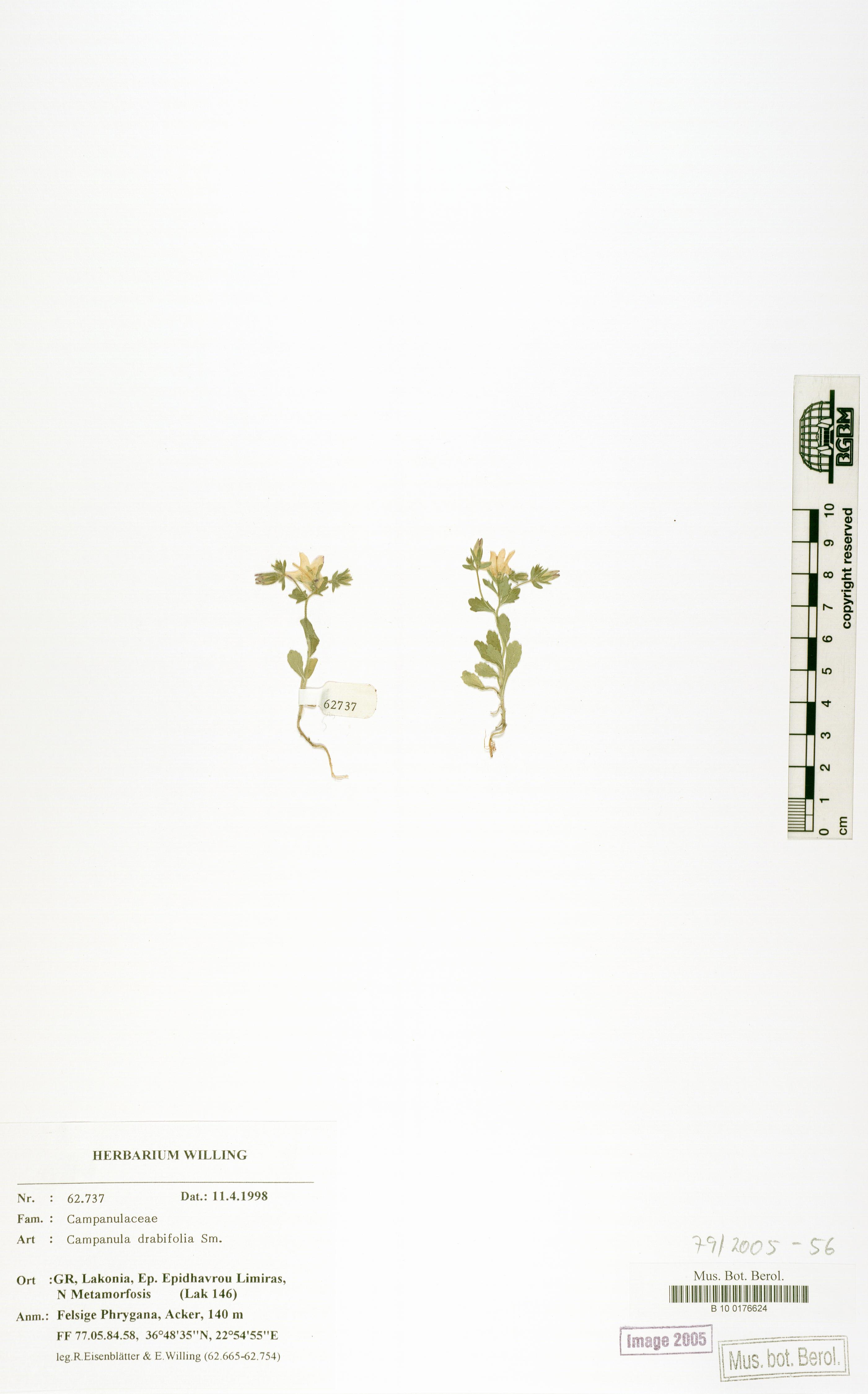 http://ww2.bgbm.org/herbarium/images/B/10/01/76/62/B_10_0176624.jpg