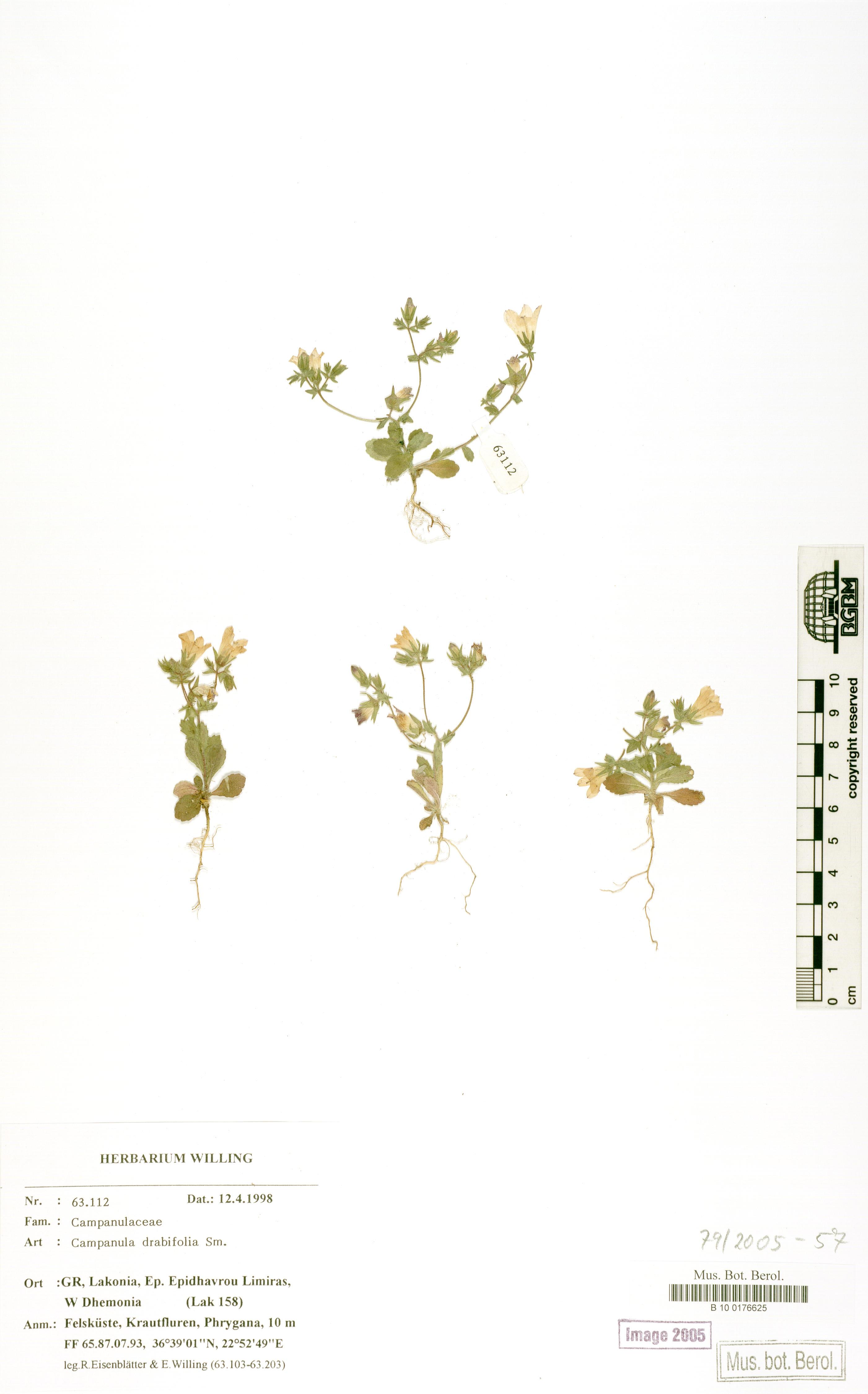 http://ww2.bgbm.org/herbarium/images/B/10/01/76/62/B_10_0176625.jpg