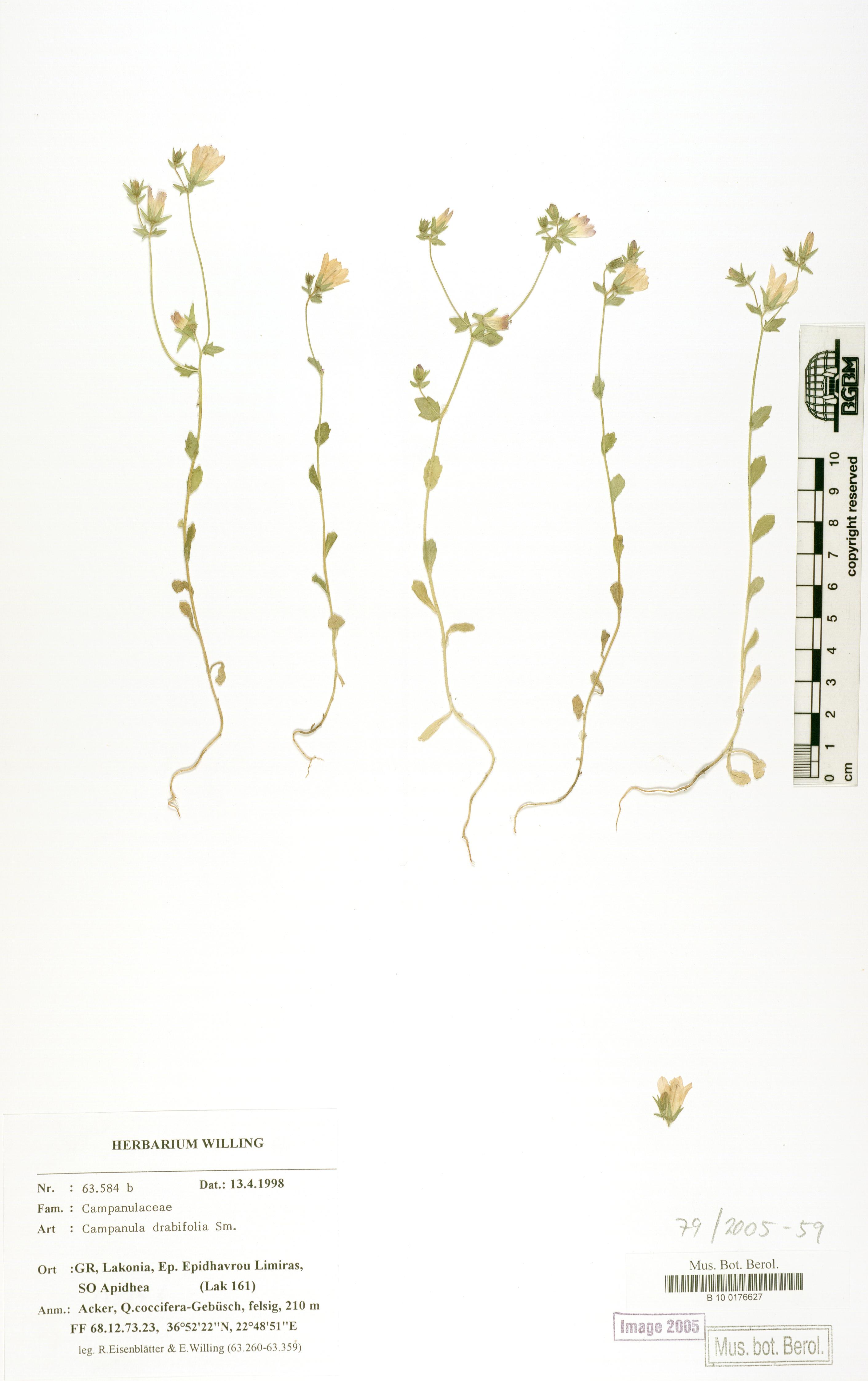 http://ww2.bgbm.org/herbarium/images/B/10/01/76/62/B_10_0176627.jpg