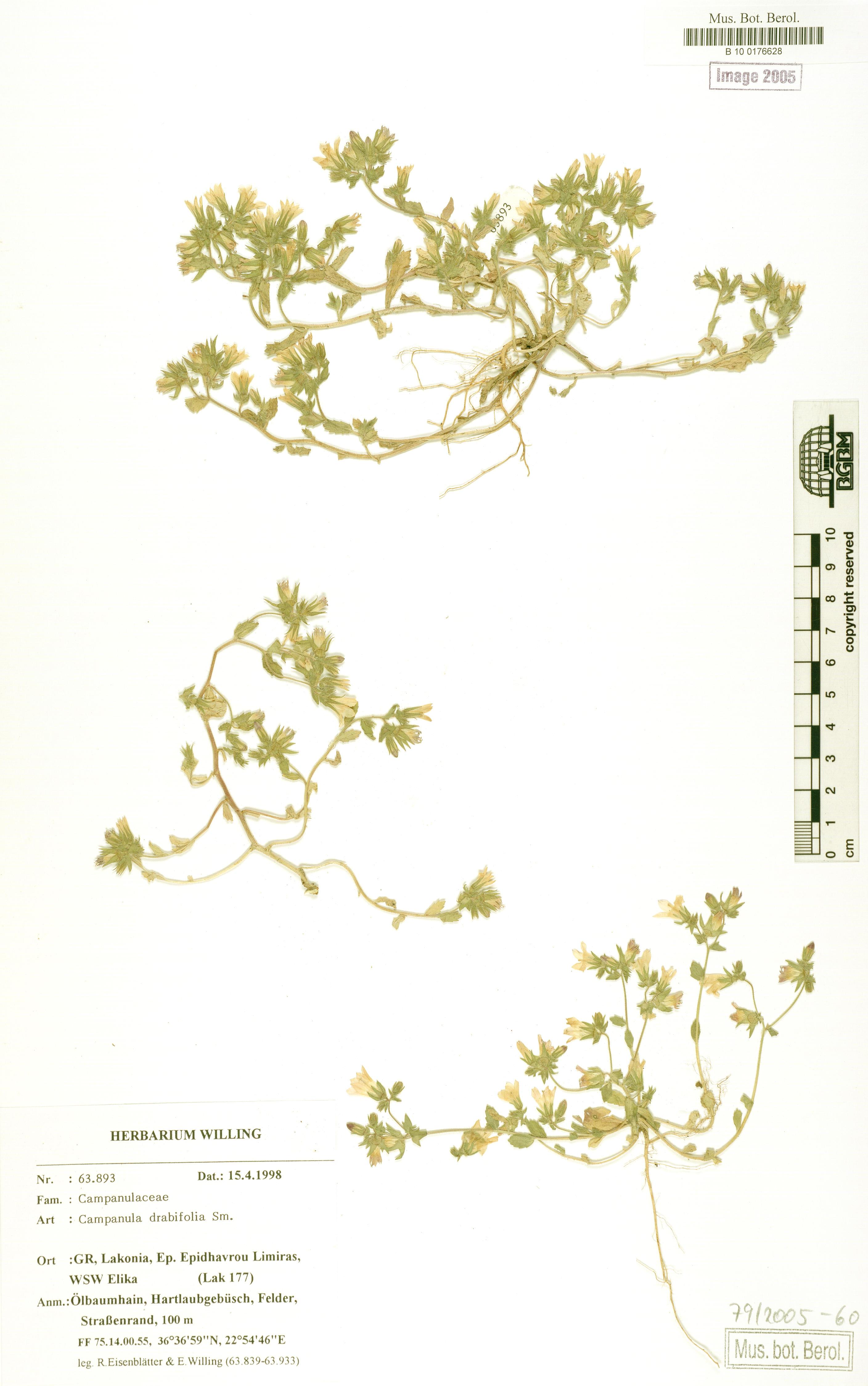http://ww2.bgbm.org/herbarium/images/B/10/01/76/62/B_10_0176628.jpg