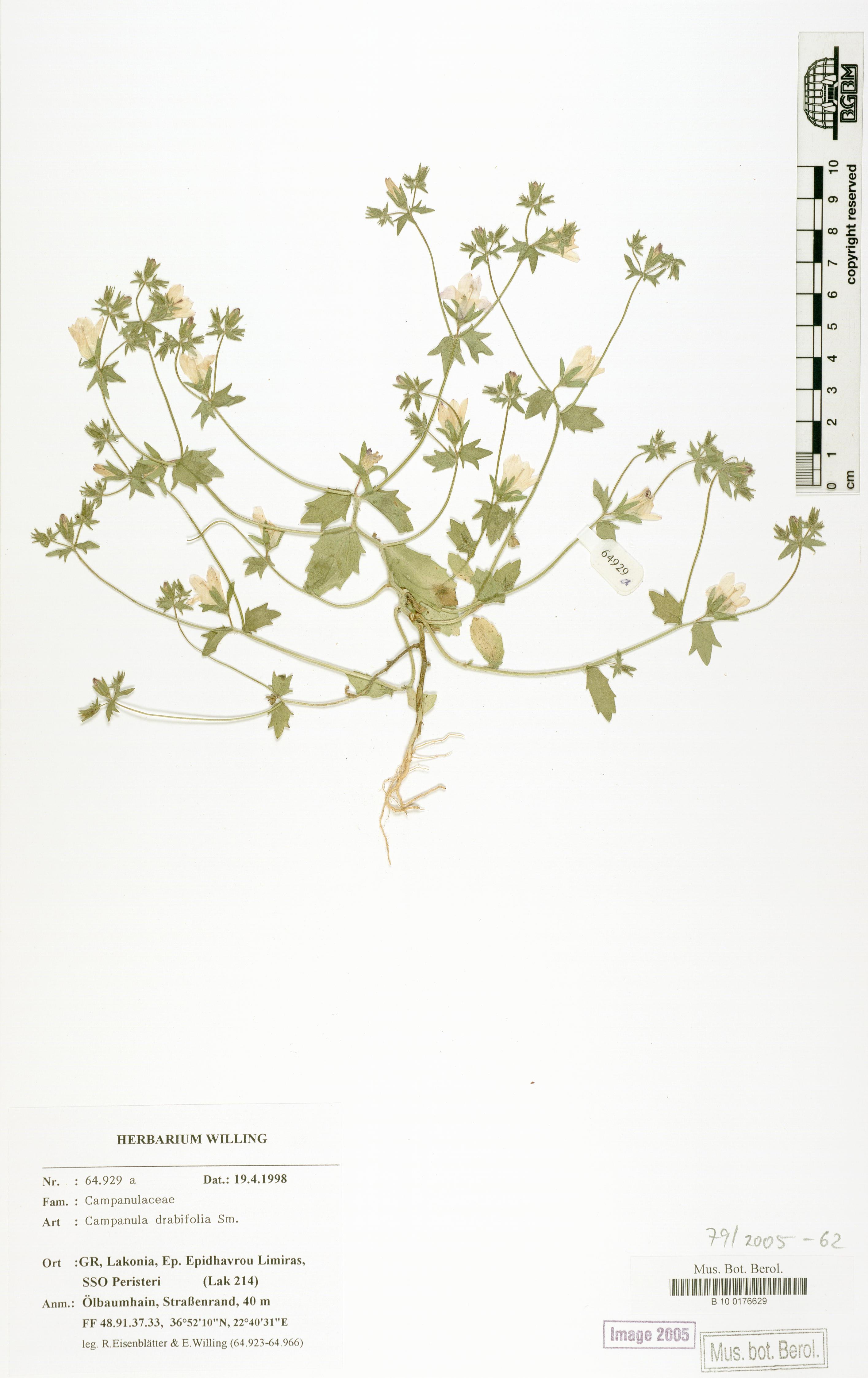 http://ww2.bgbm.org/herbarium/images/B/10/01/76/62/B_10_0176629.jpg