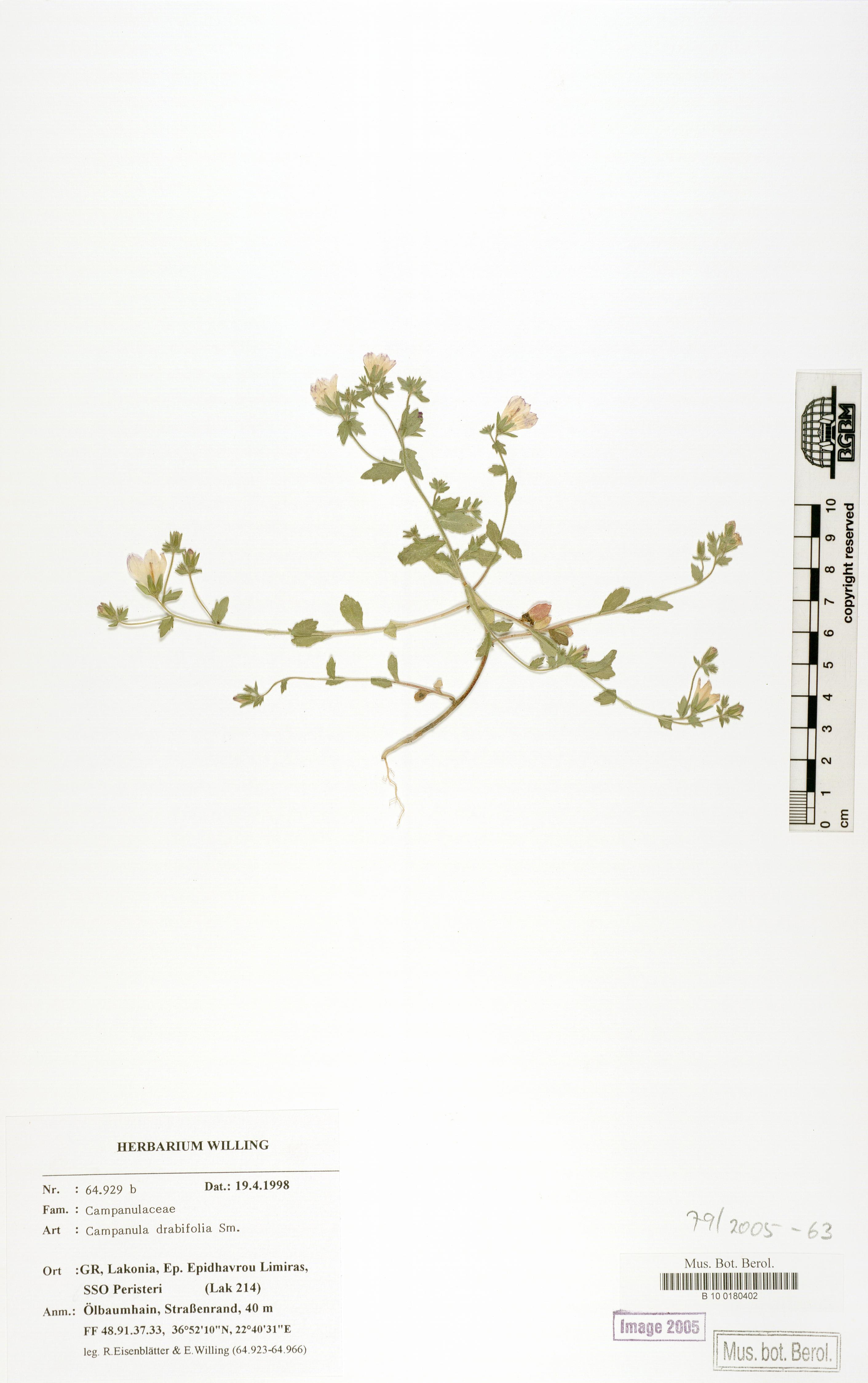http://ww2.bgbm.org/herbarium/images/B/10/01/80/40/B_10_0180402.jpg