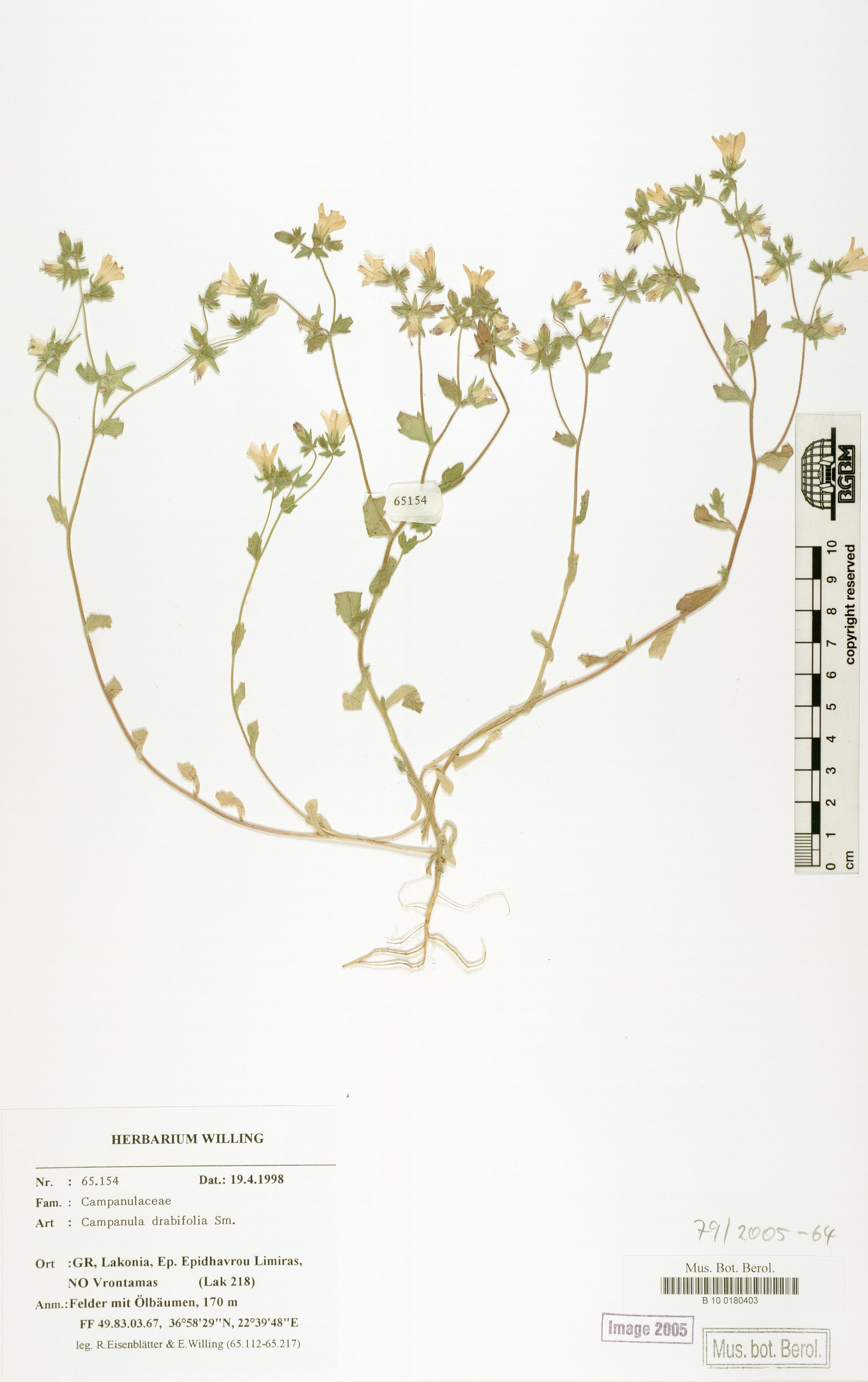 http://ww2.bgbm.org/herbarium/images/B/10/01/80/40/B_10_0180403.jpg