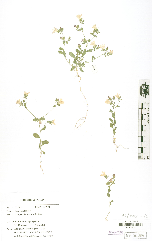 http://ww2.bgbm.org/herbarium/images/B/10/01/80/40/B_10_0180405.jpg