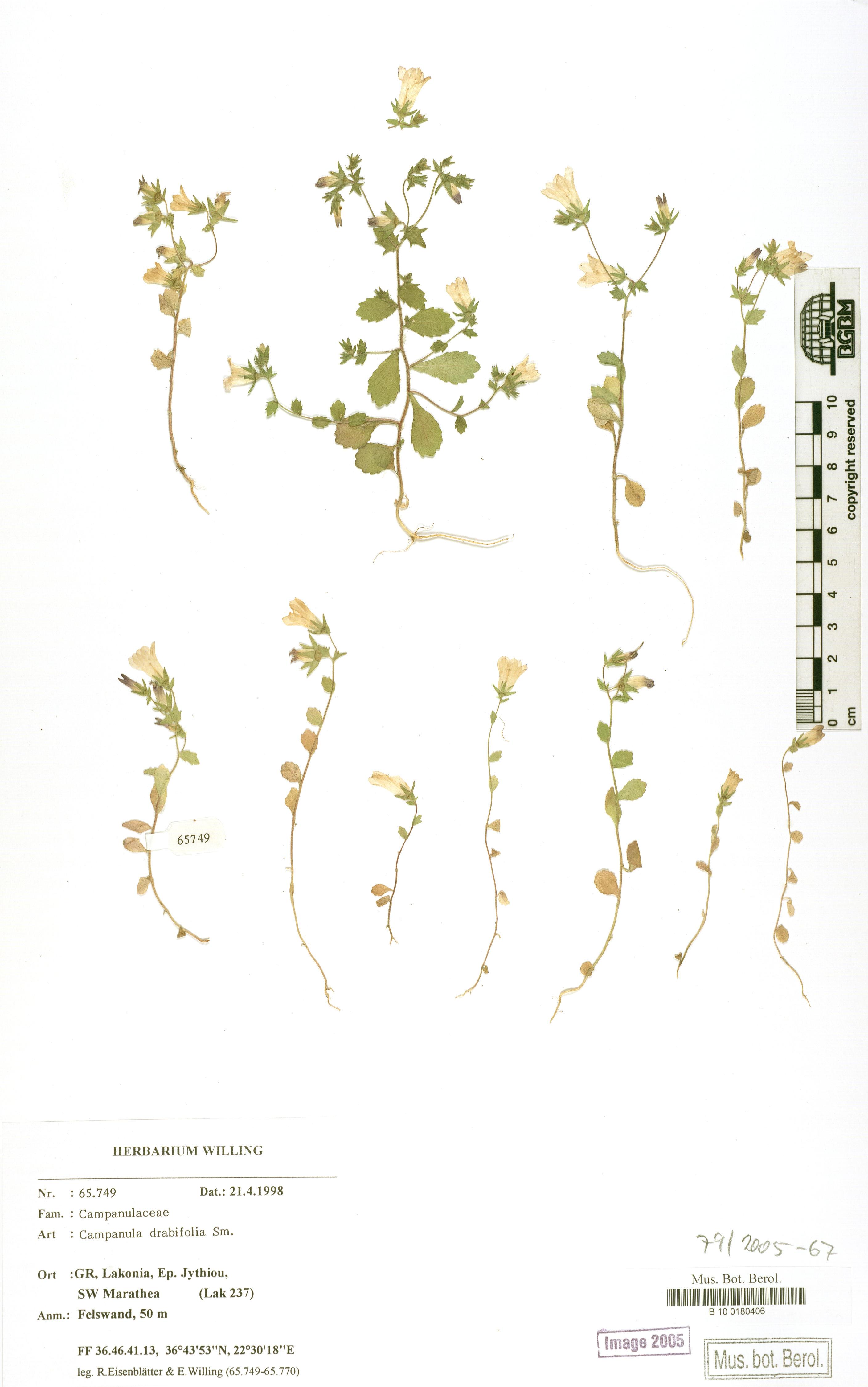 http://ww2.bgbm.org/herbarium/images/B/10/01/80/40/B_10_0180406.jpg