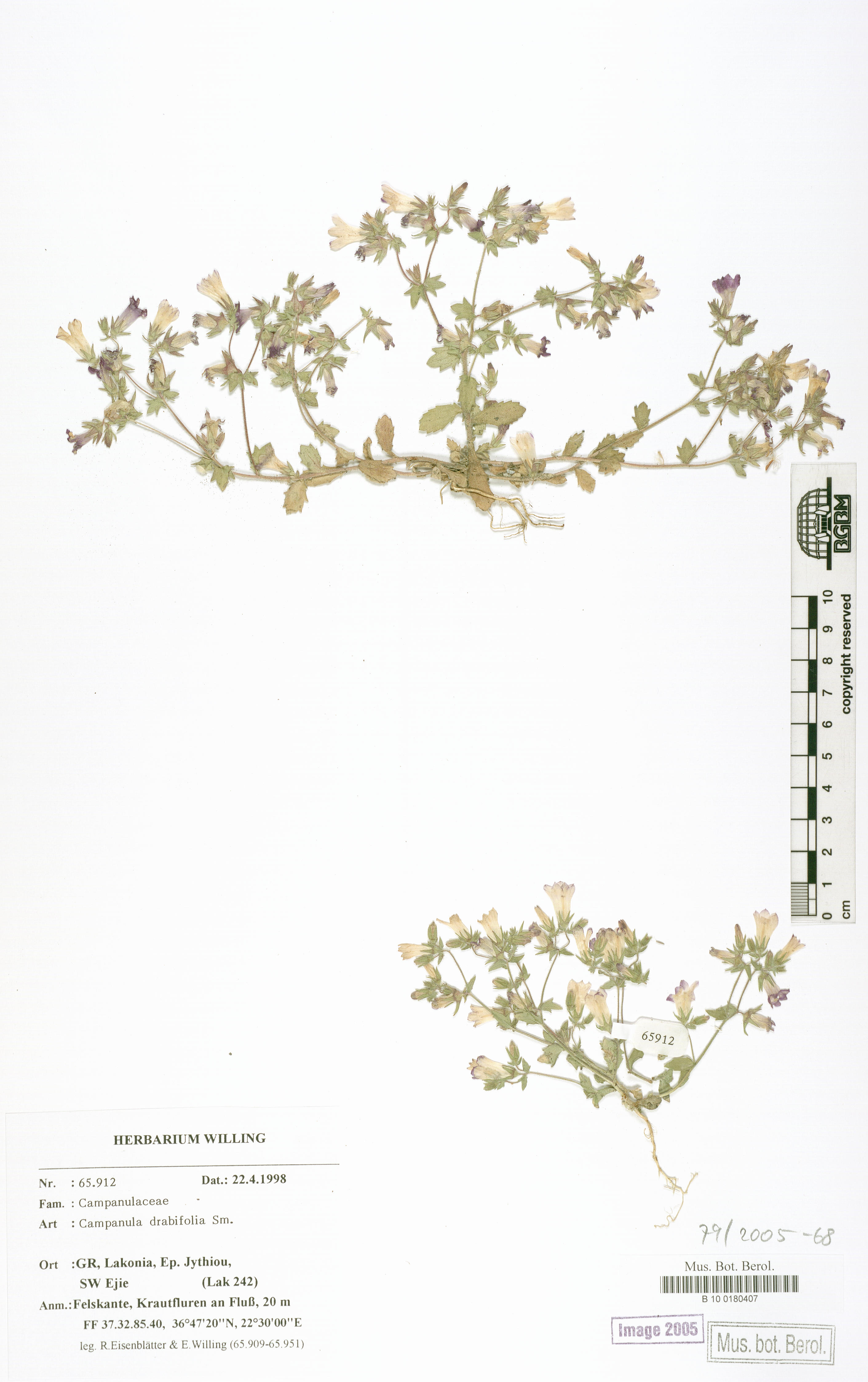 http://ww2.bgbm.org/herbarium/images/B/10/01/80/40/B_10_0180407.jpg